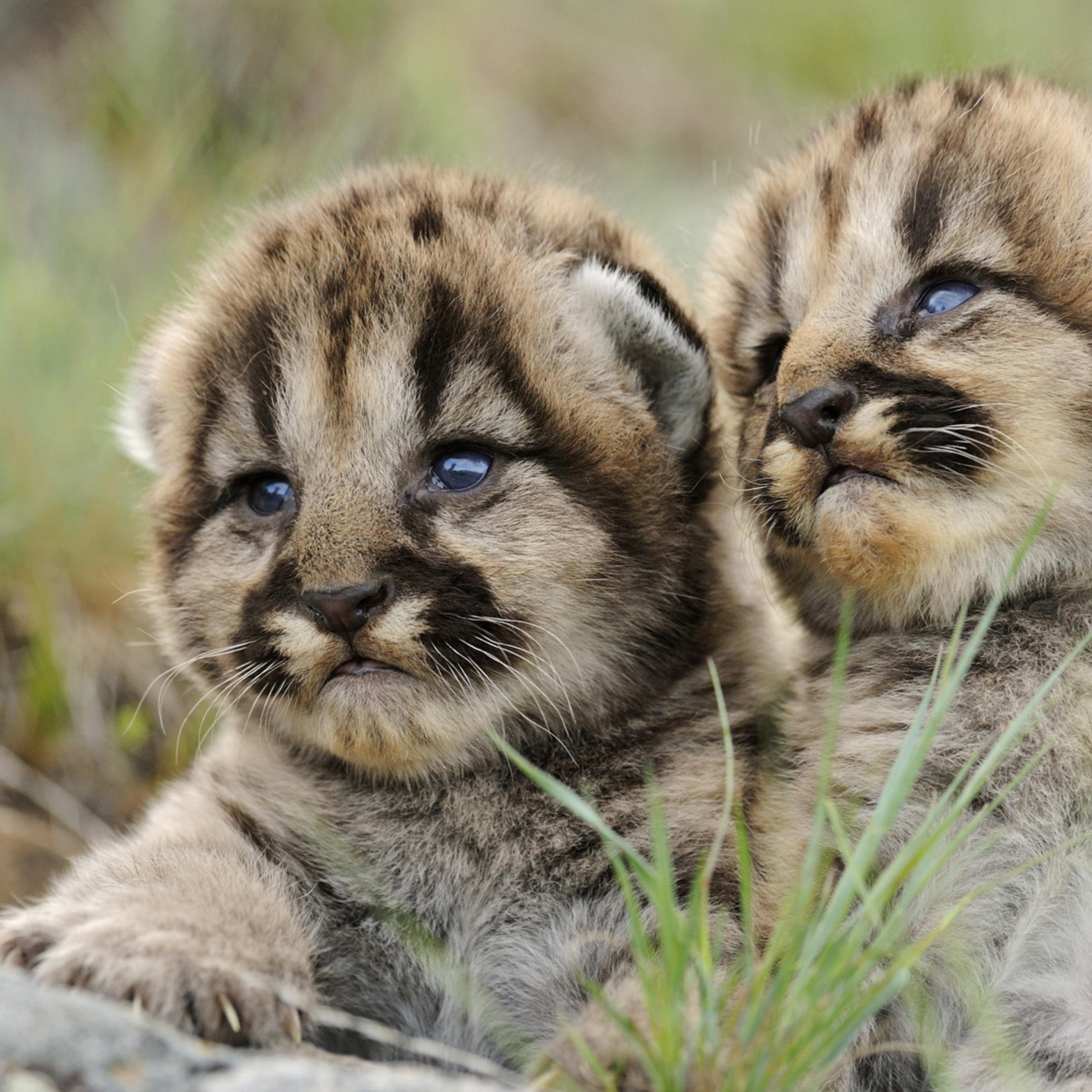 Two Amazing Baby Animals Hd Wallpaper