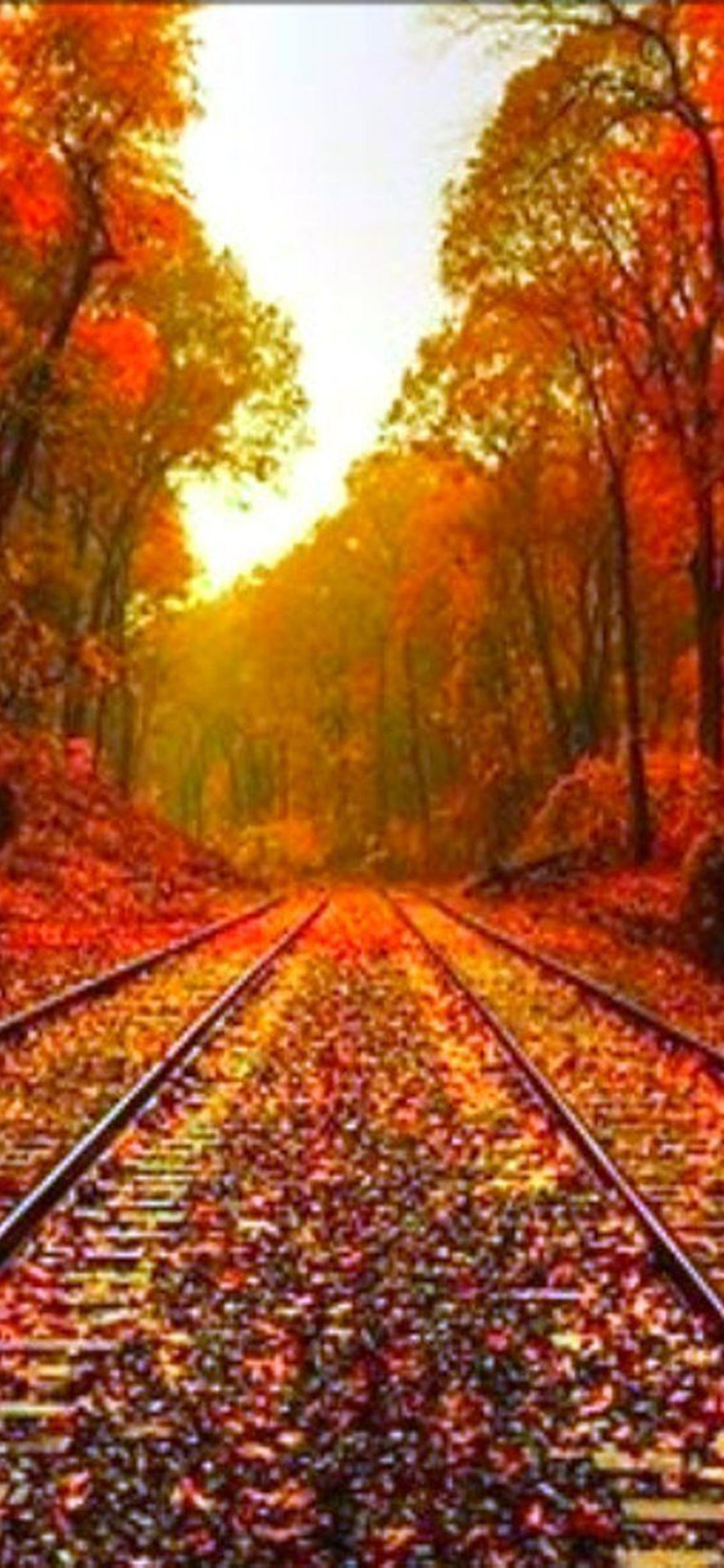 Autumn Leaves On The Rails Hd Wonderful Wallpaper