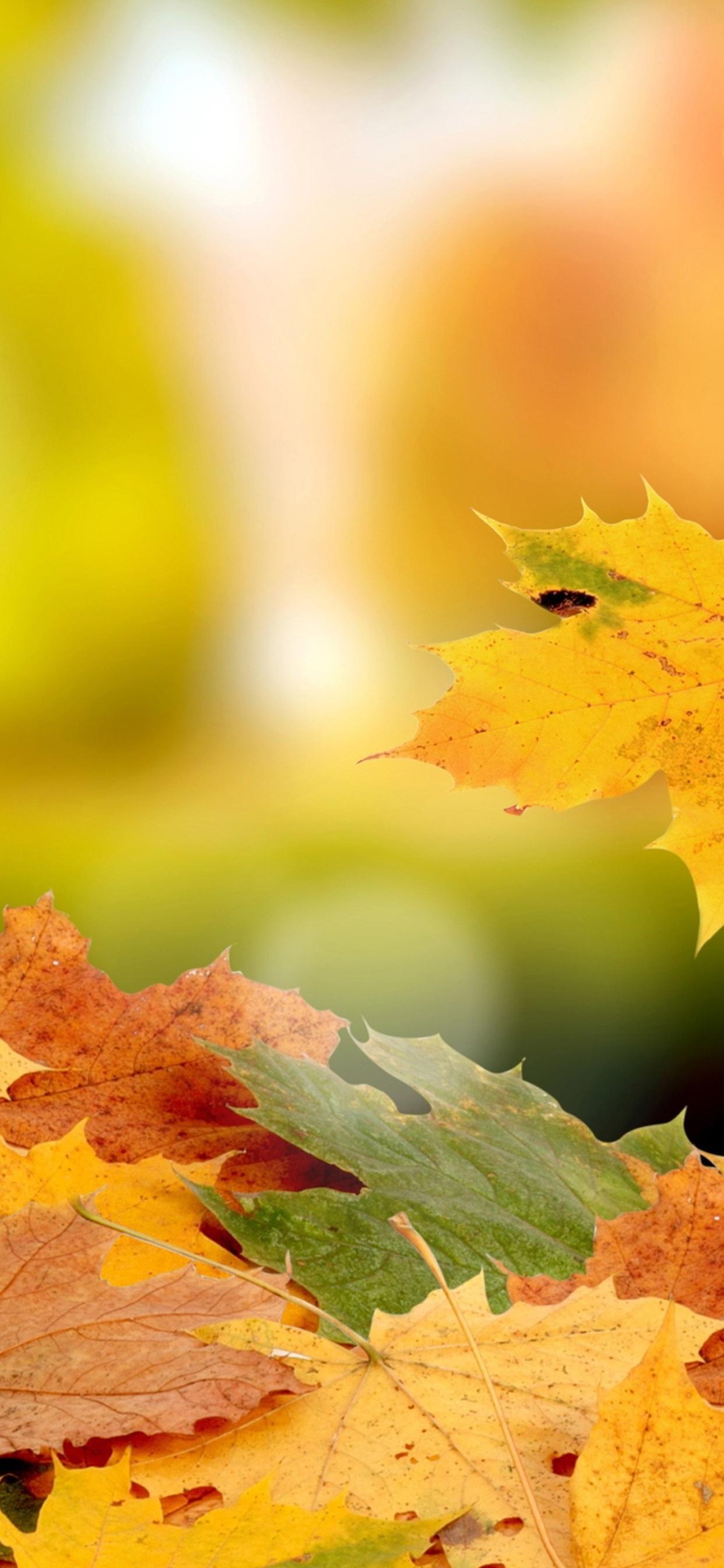 Beautiful Carpet Of Autumn Leaves Hd Wallpaper