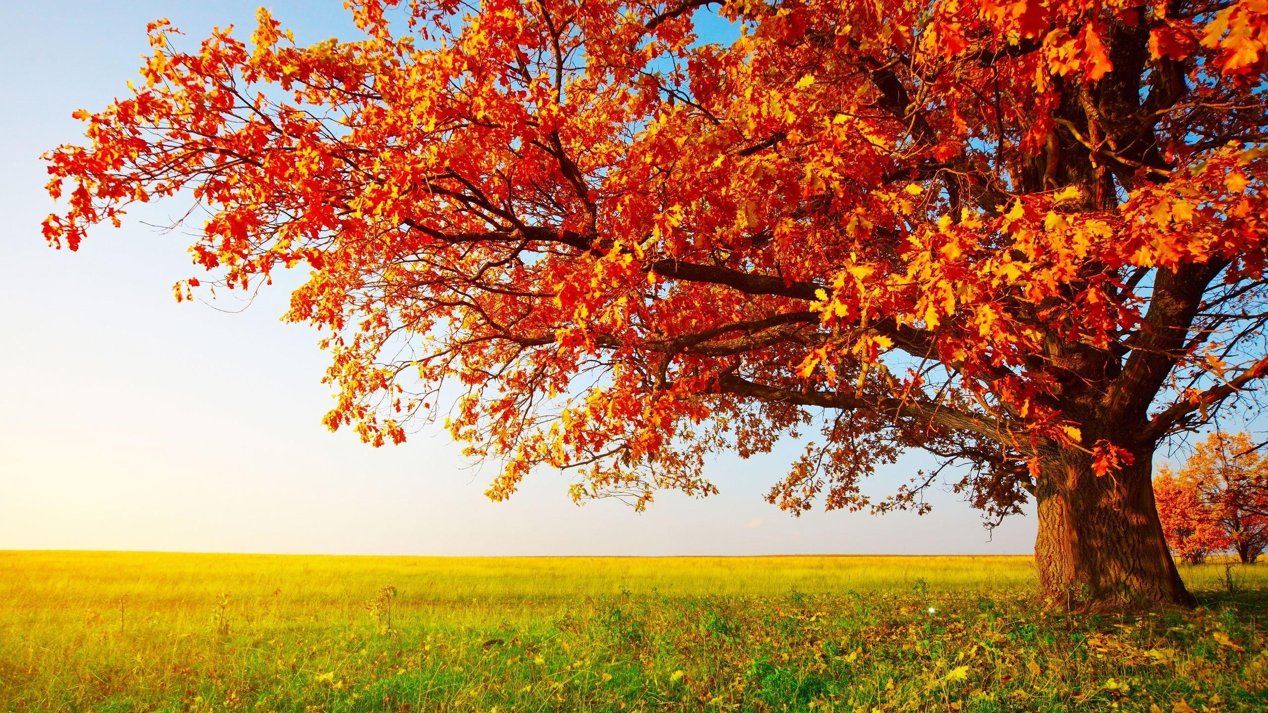 Big Tree In The Middle Of Autumn Season Hd Wallpaper