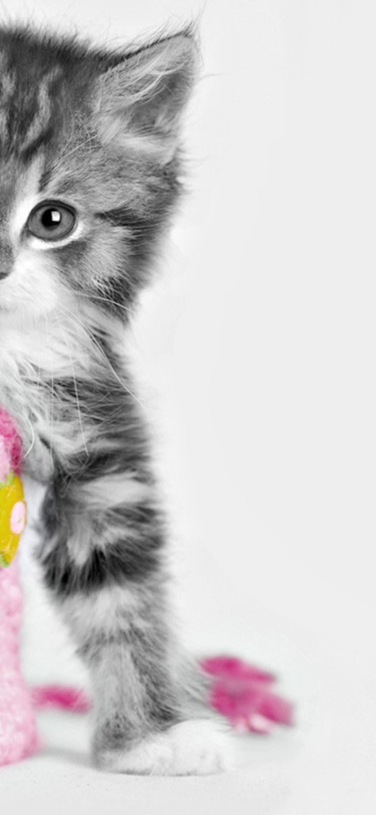 Sweet Little Cat And A Pink Bag Hd Wallpaper