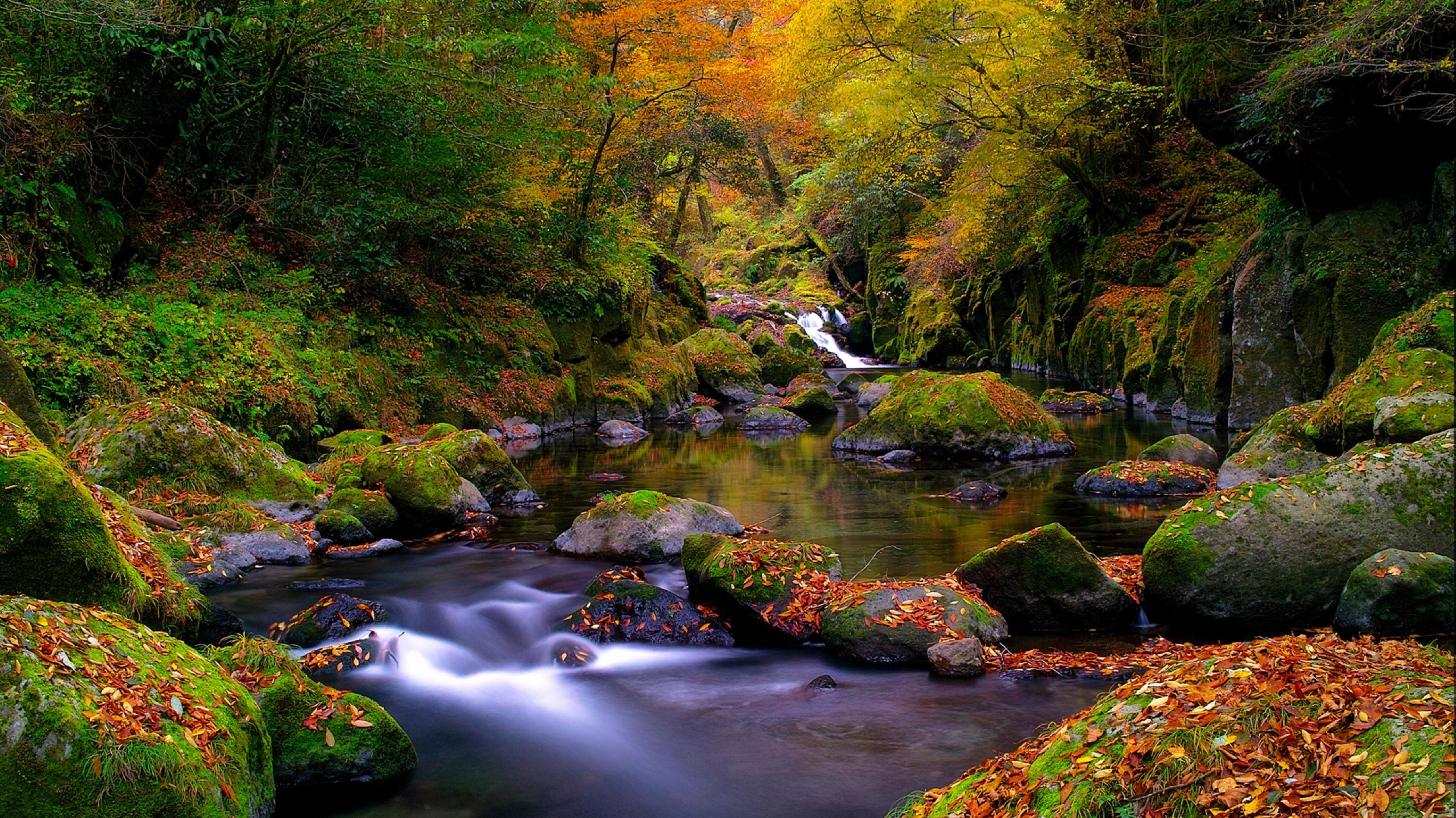 A beautiful autumn landscape in the forest Wallpaper ...