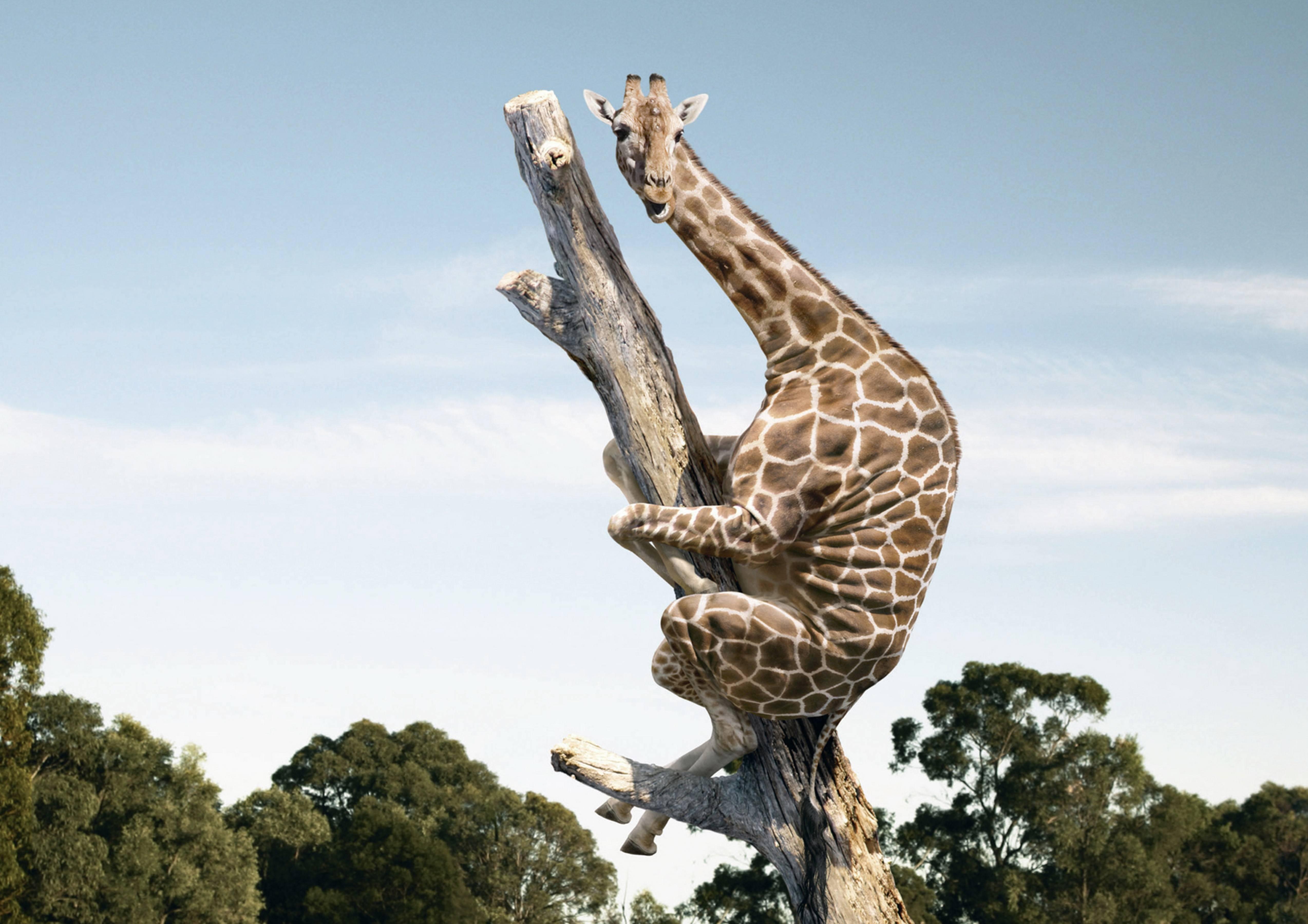 Жирафенок прикольные картинки 3