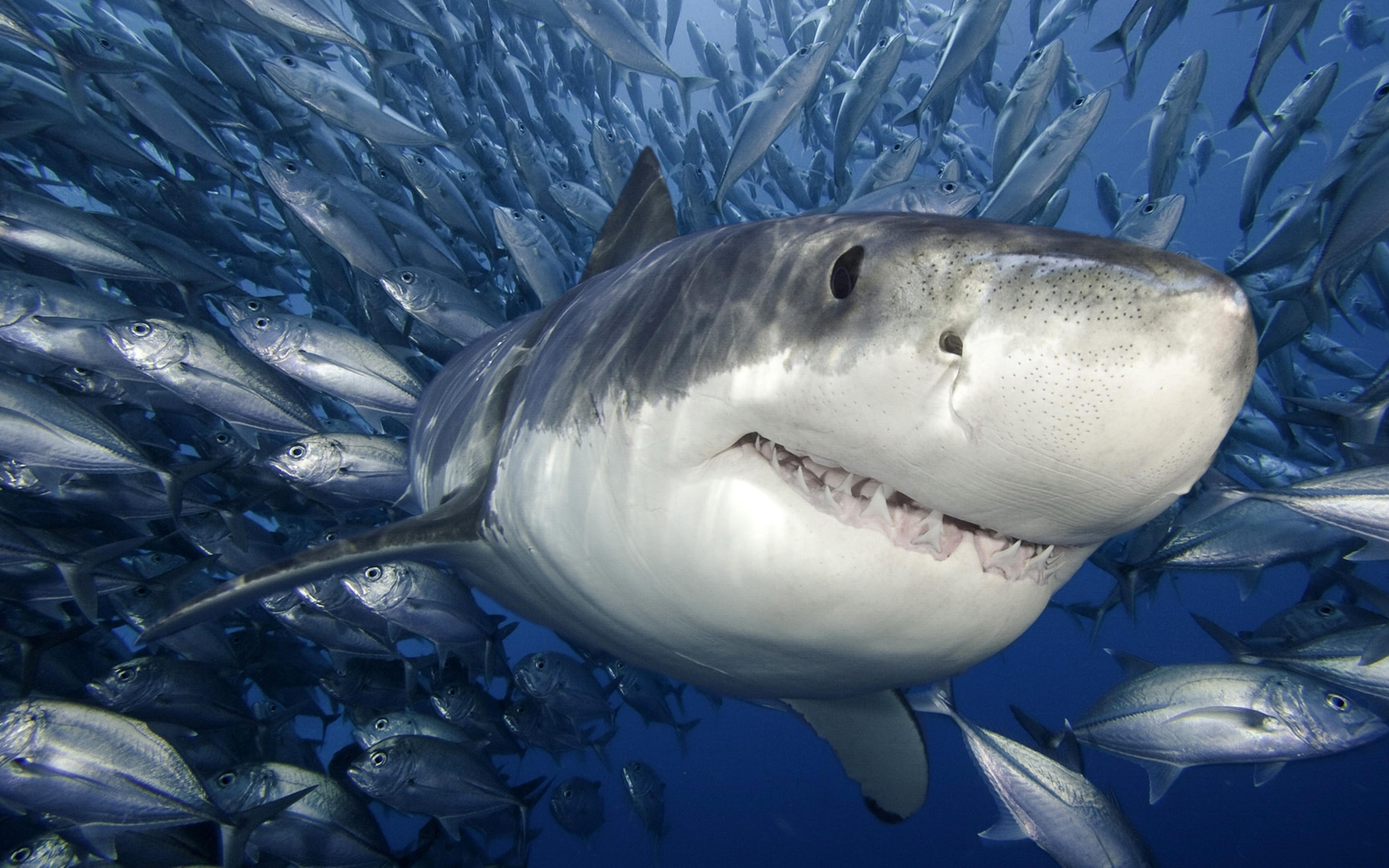 A shark and many other fish in the sea wallpaper download for Other fish in the sea