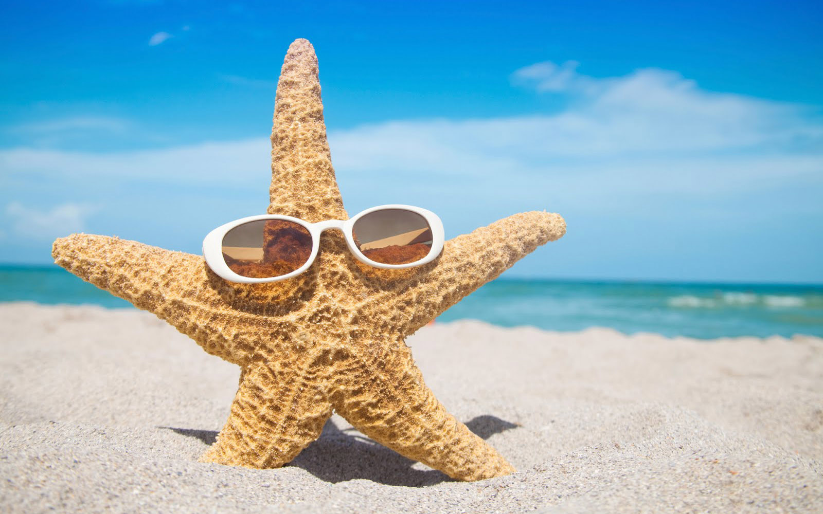 Myrtle Beach Mercedes >> A starfish with sunglasses in the sand