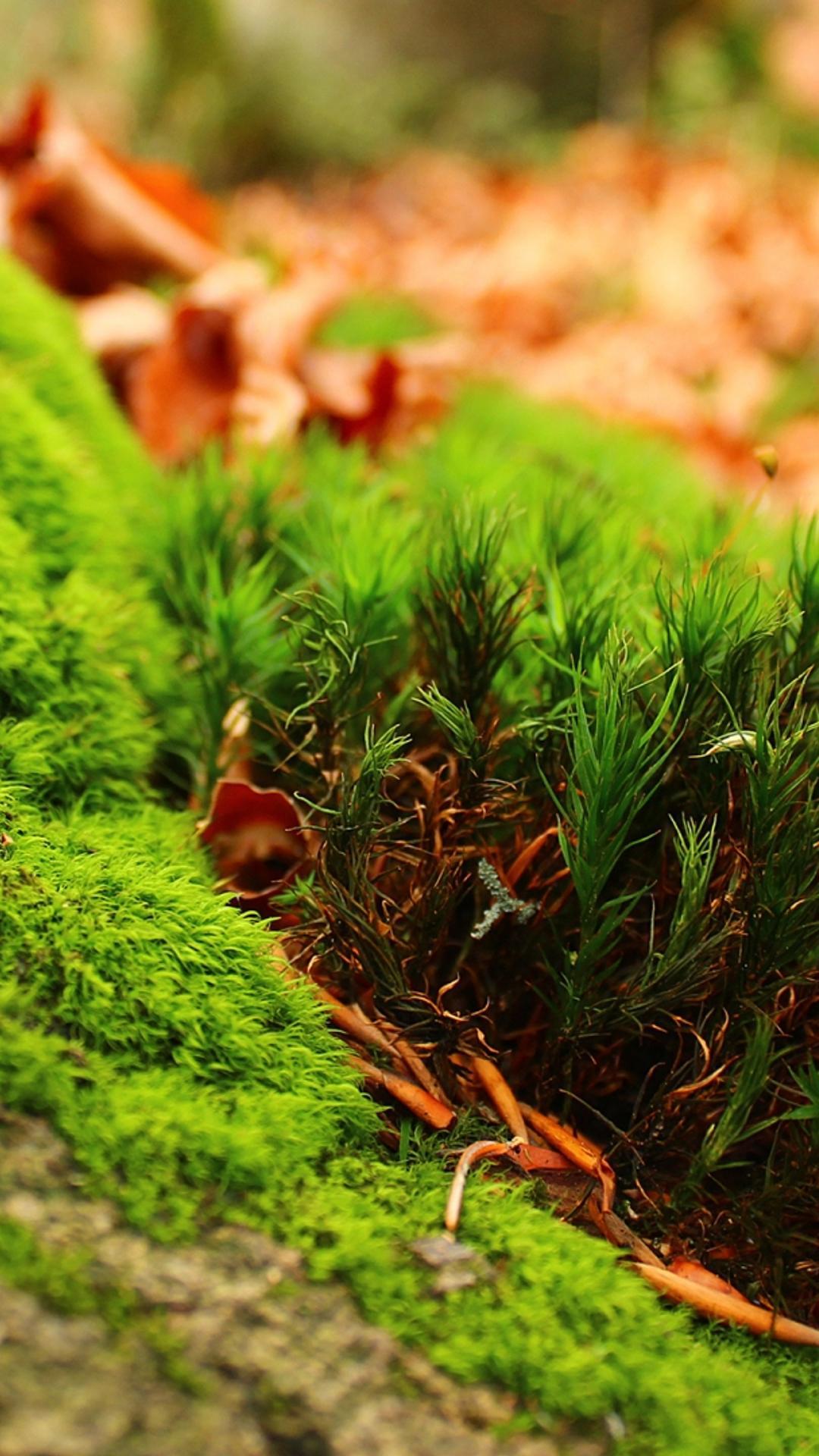 Amazing Green Moss