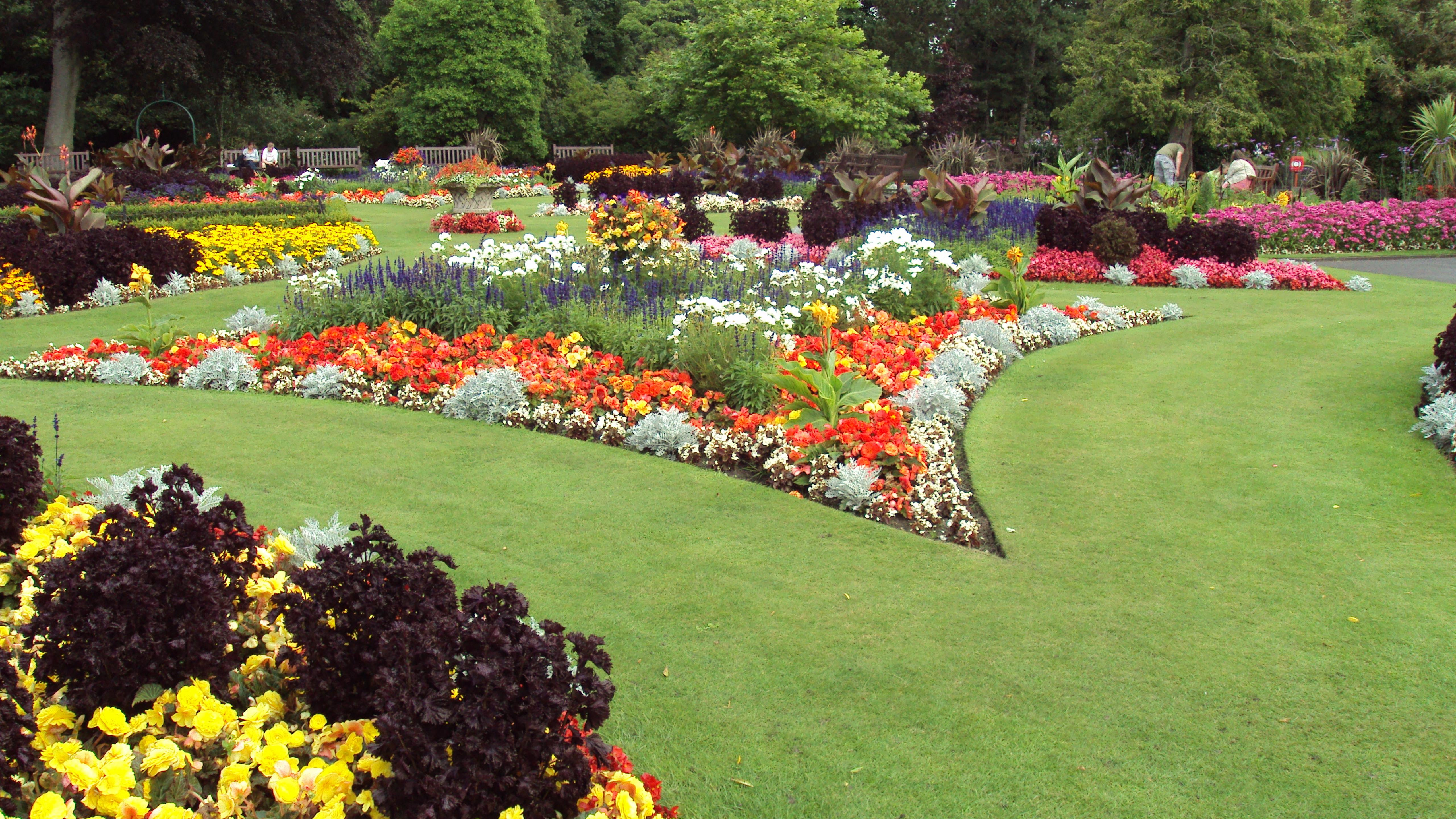 Фото цветов и растений для ландшафта