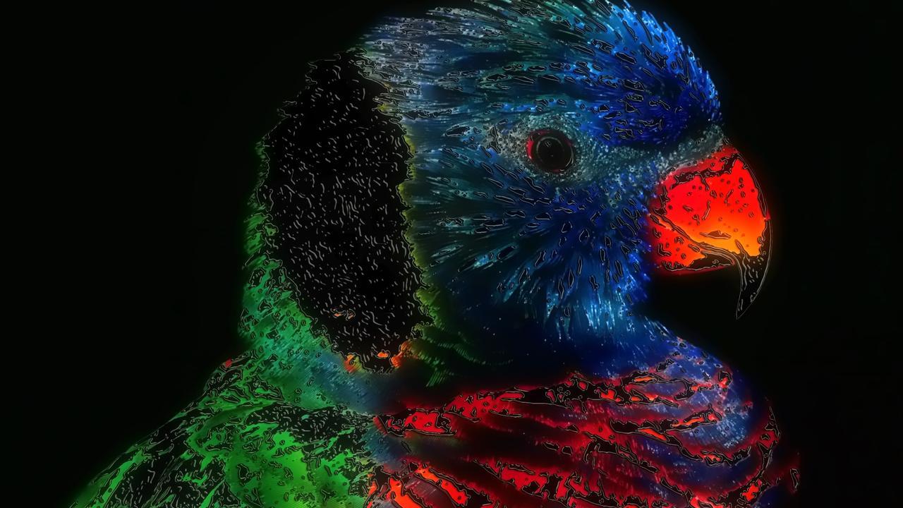Artistic Colorful Bird Wallpaper