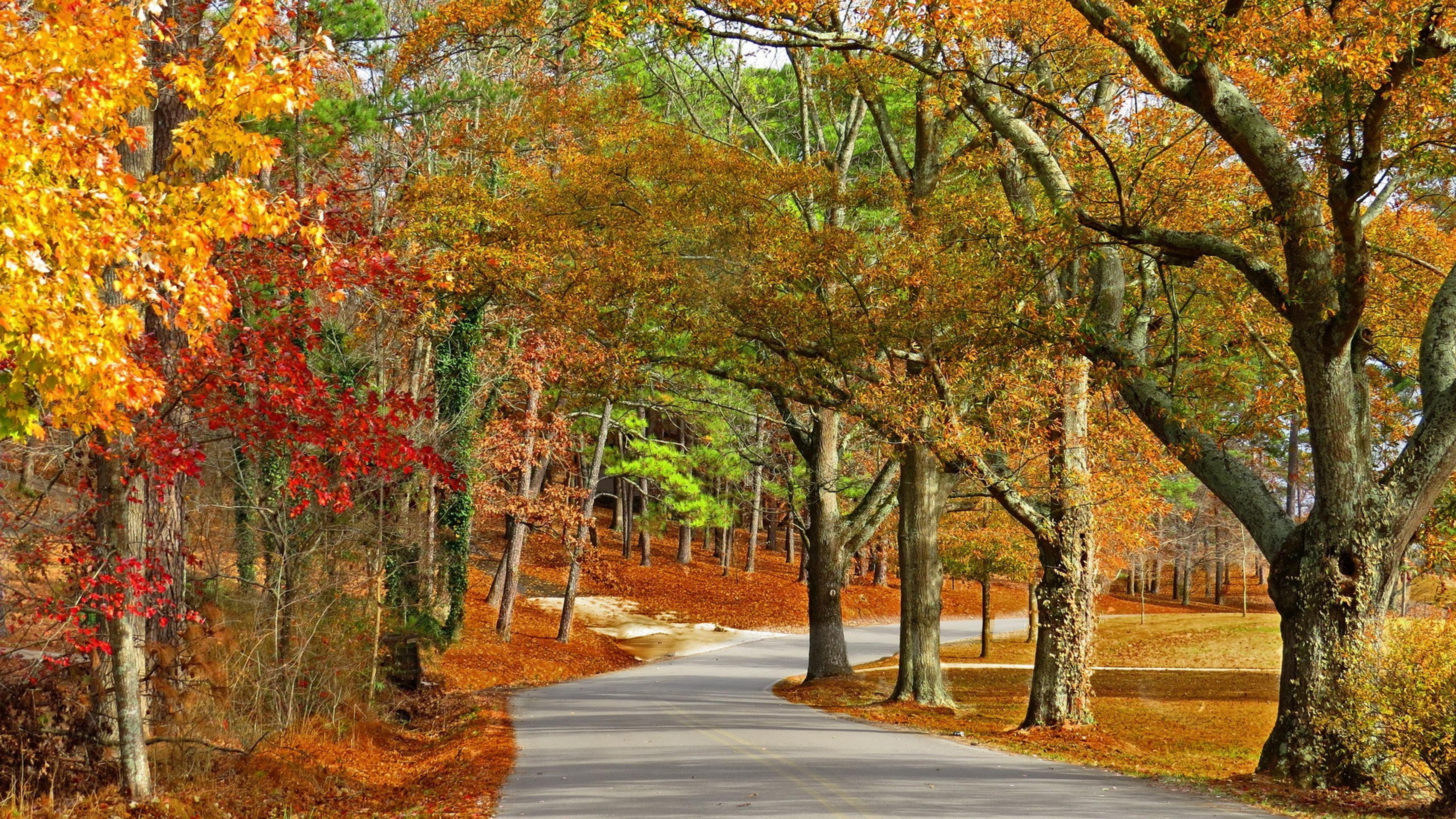 Autumn In The Park Multicolored Trees Wallpaper Download
