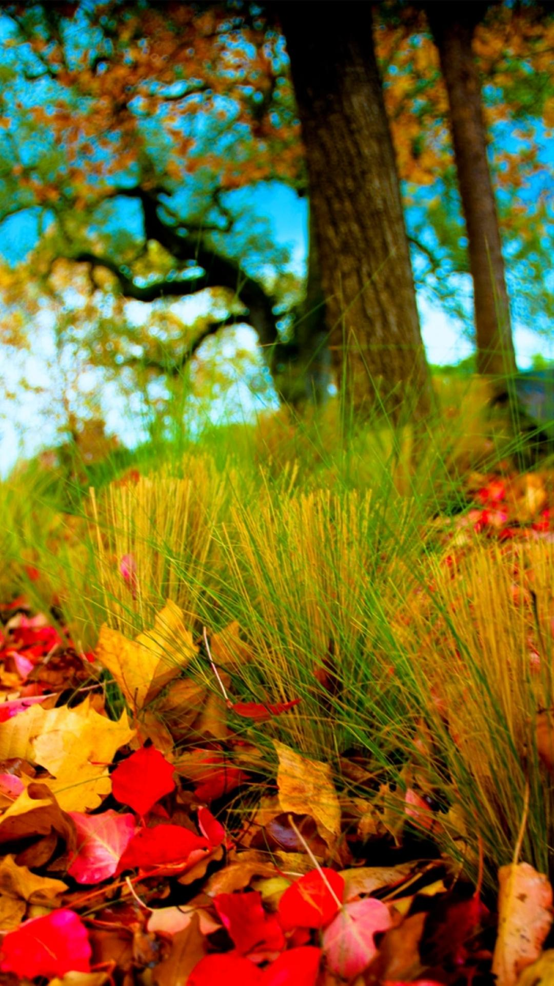 Autumn Leaves On The Field