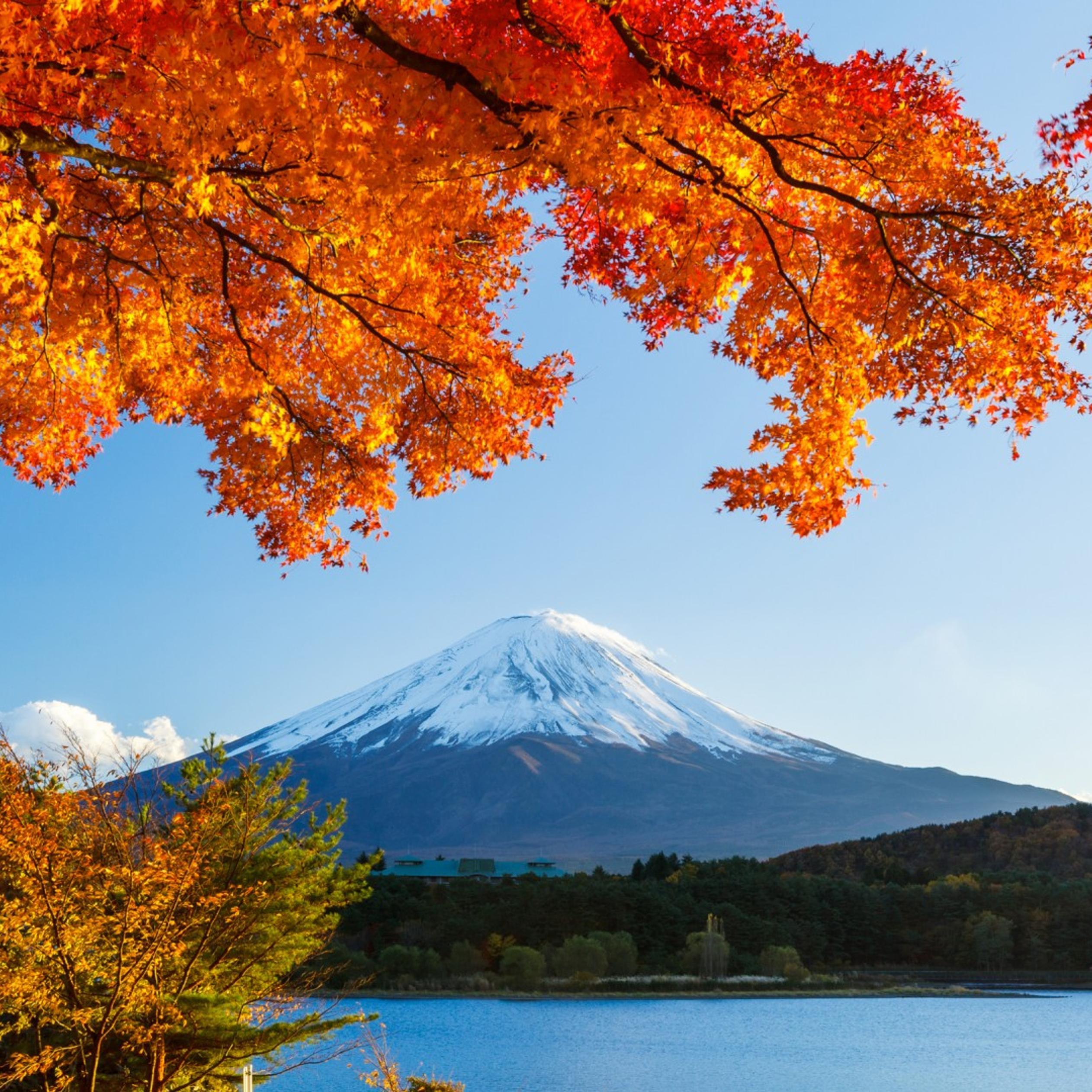 autumn trees winter mountain - hd wallpaper wallpaper download 2524x2524