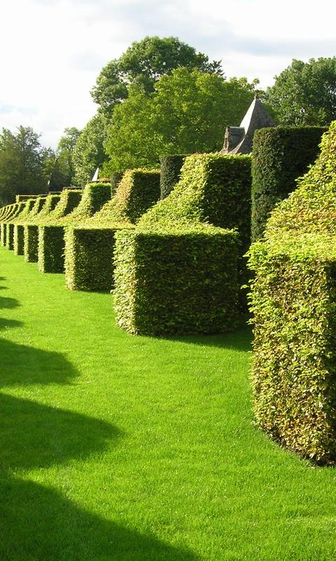 Awesome green french garden wallpaper Wallpaper Download 480x800