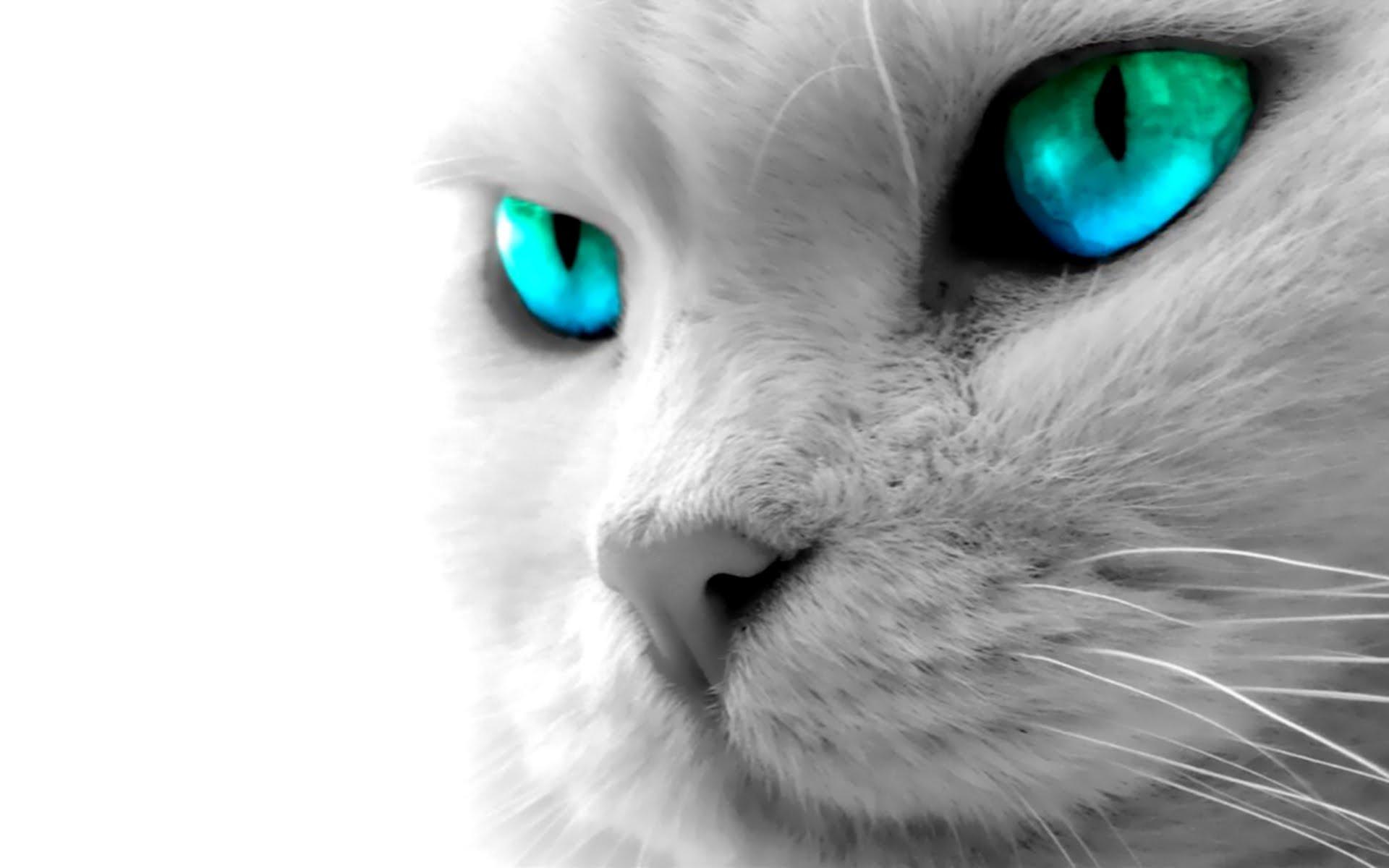 beautiful cat with blue digital eye - hd wallpaper