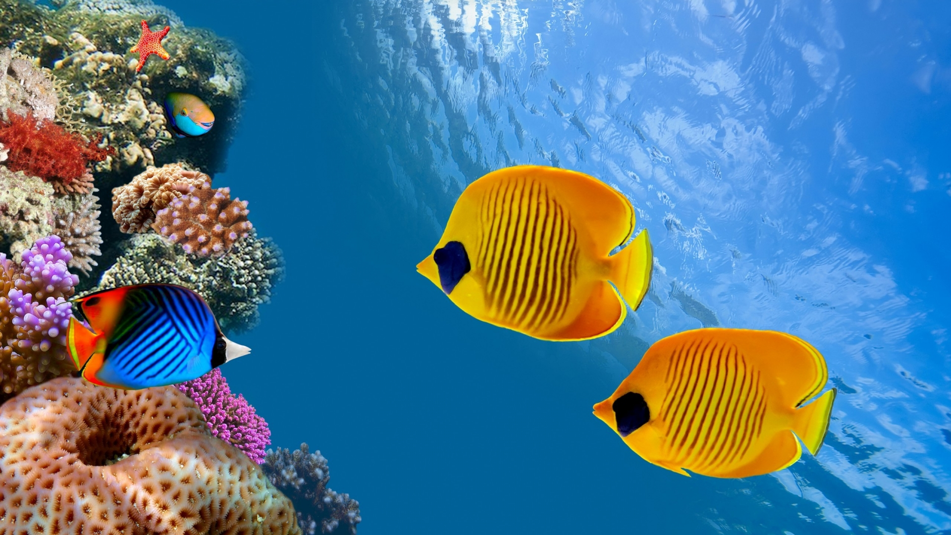 Beautiful Colorful Fish In The Siam Bay Thailand