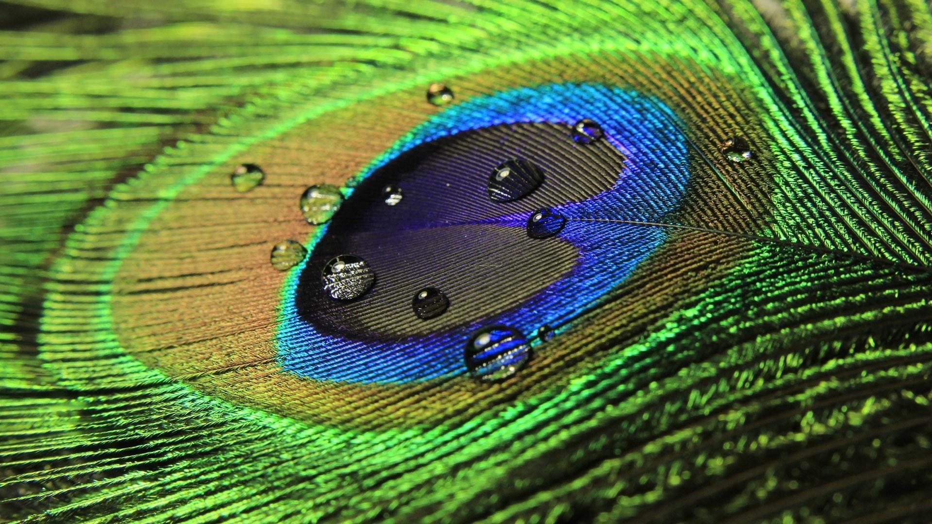 Raindrops Hd Desktopmobile Wallpapers Page 1