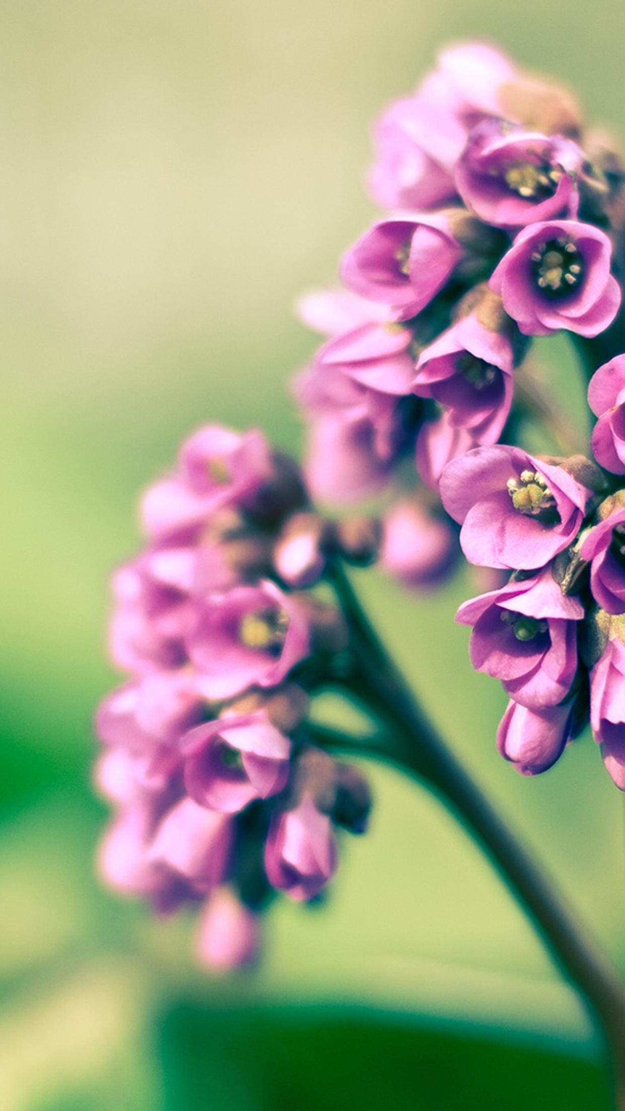 Фото цветов hd на айфон