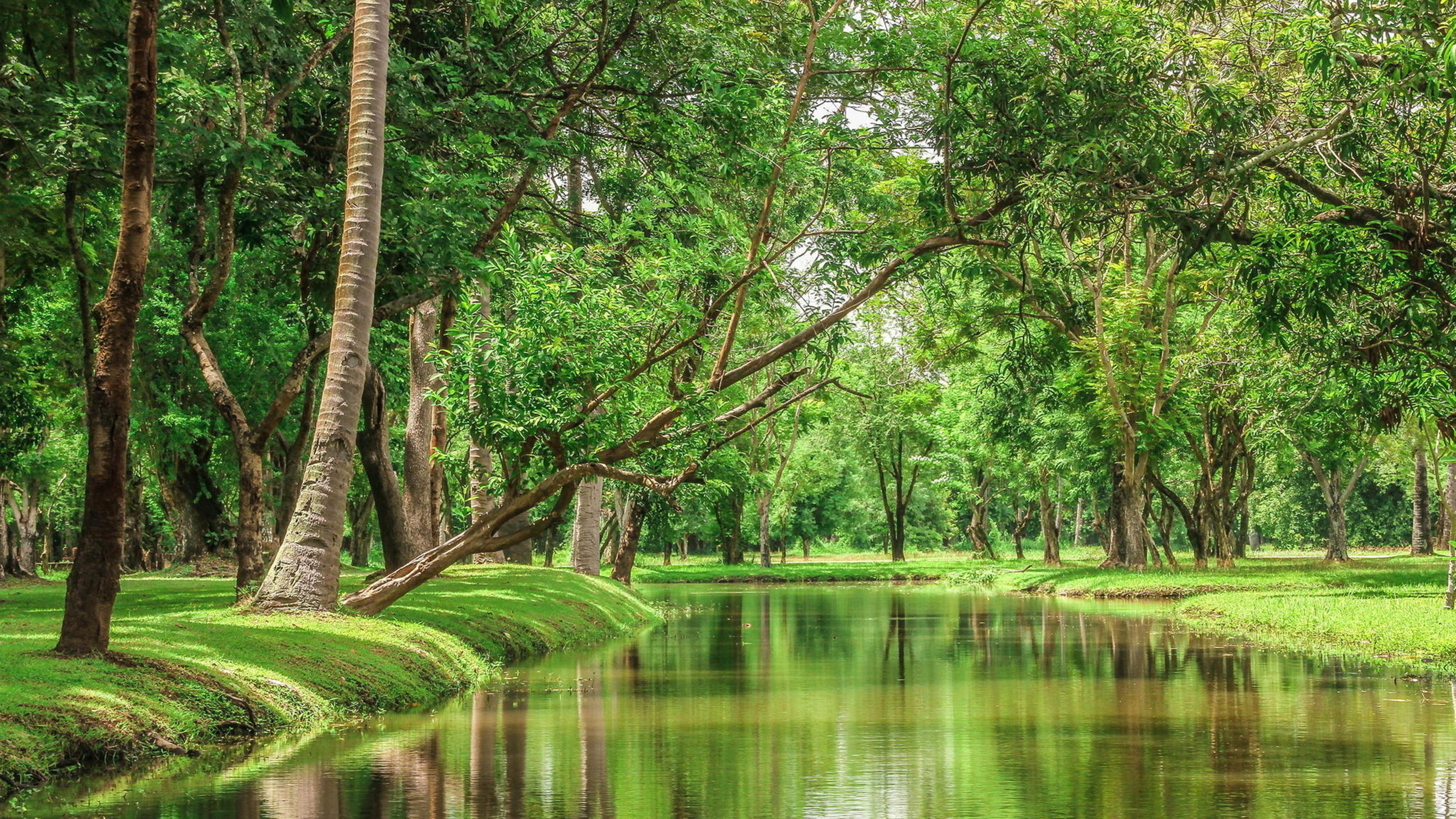 Beautiful Nature River In The Green Forest Wallpaper Download 5120x2880