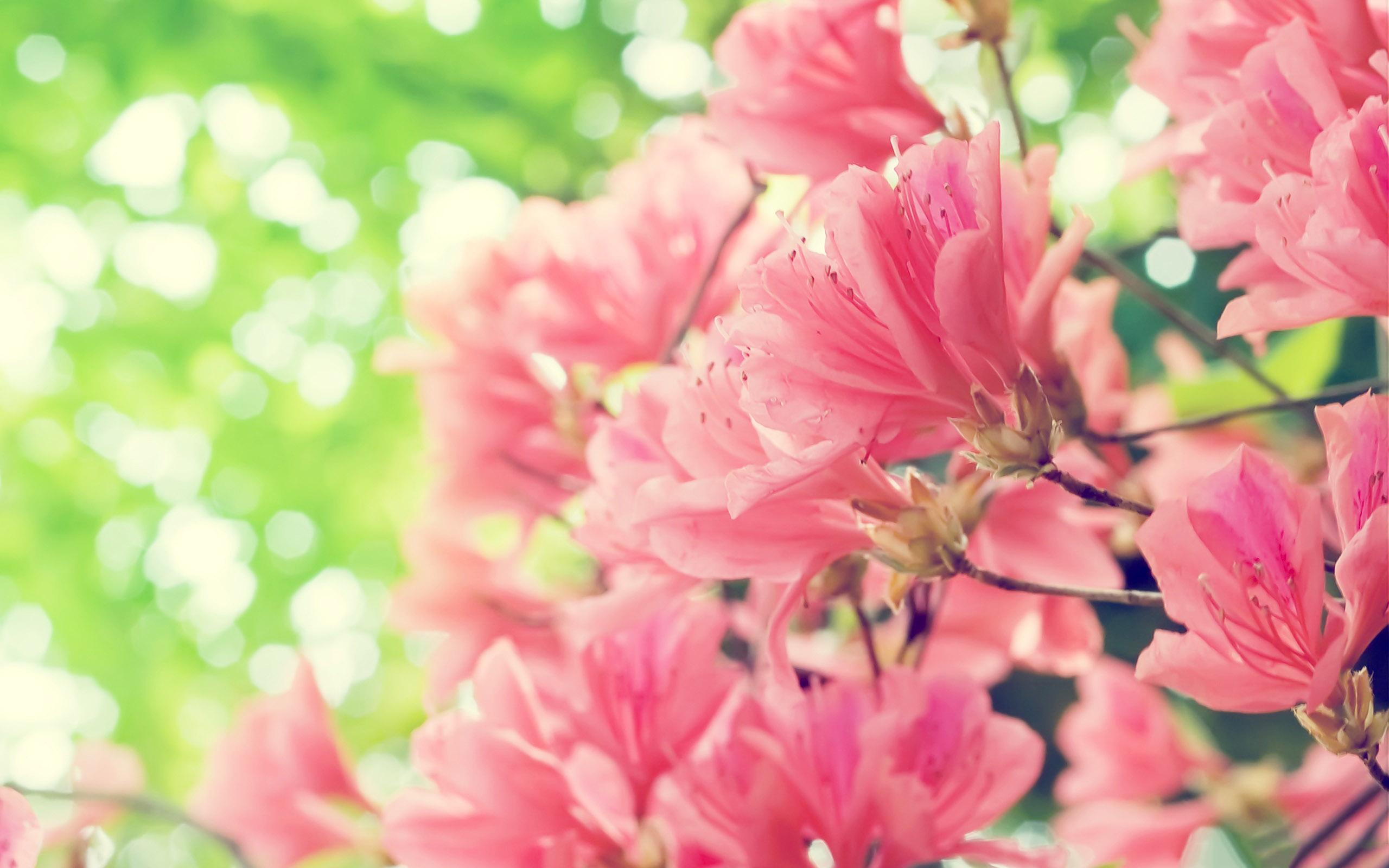 Beautiful pink spring flowers - HD nature wallpaper