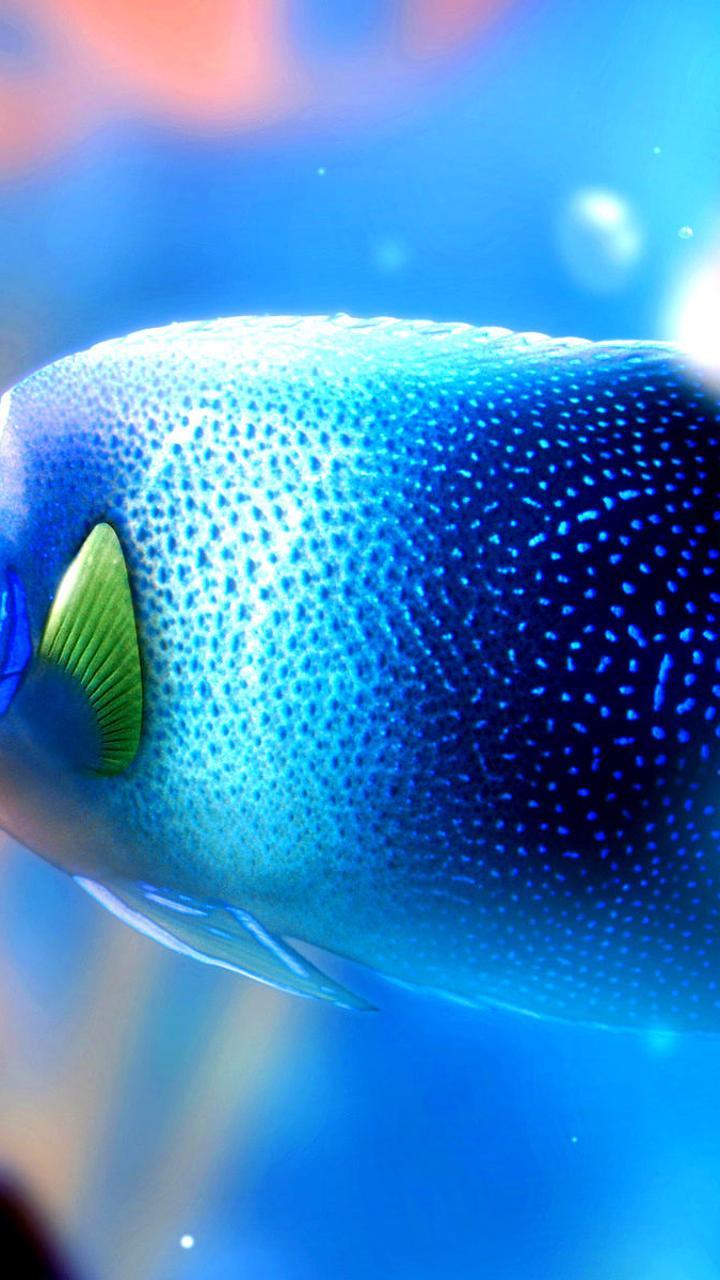 Big Blue Fish Under The Water Hd Wallpaper Wallpaper