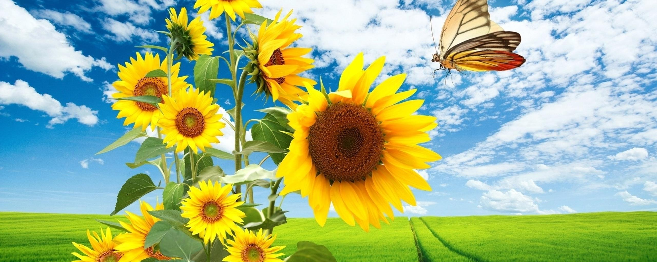 Download Wallpaper 2560x1024 Big sunflowers and a beautiful butterfly - HD wallpaper