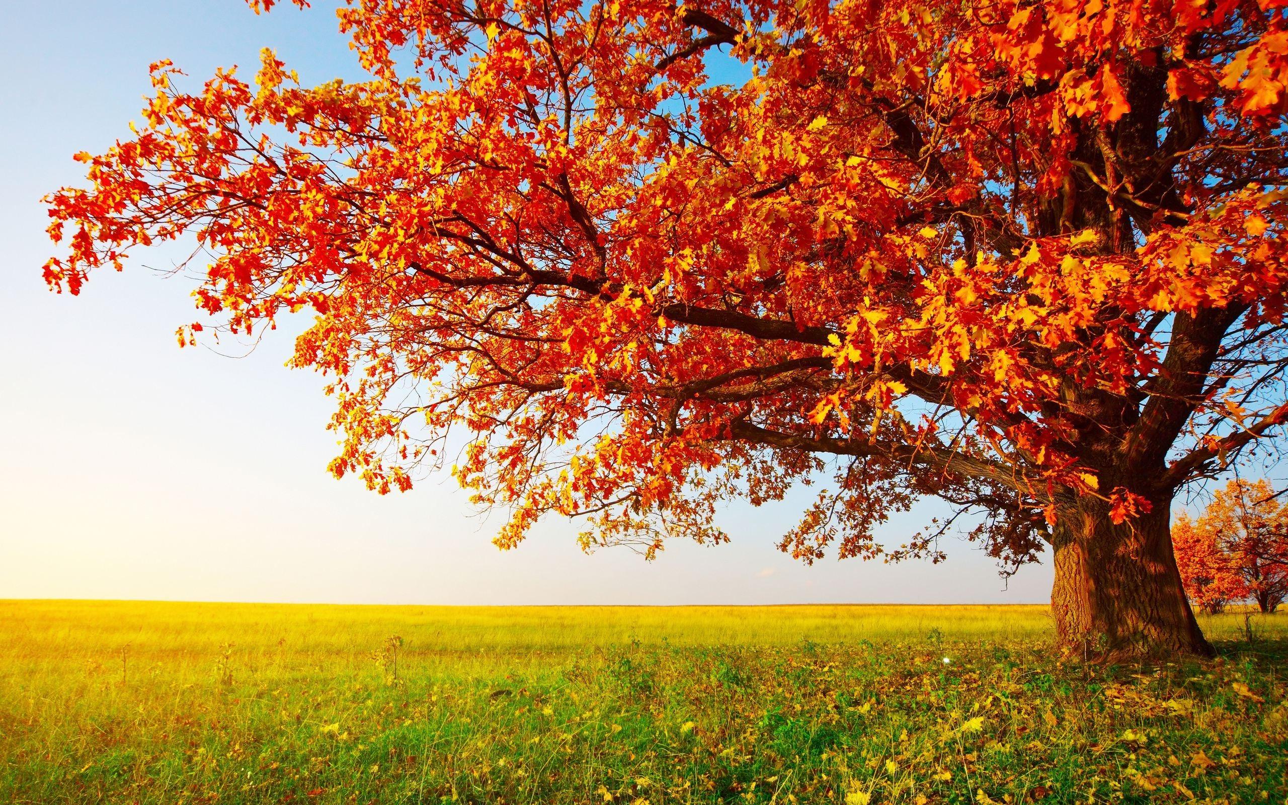 autumn season - photo #30
