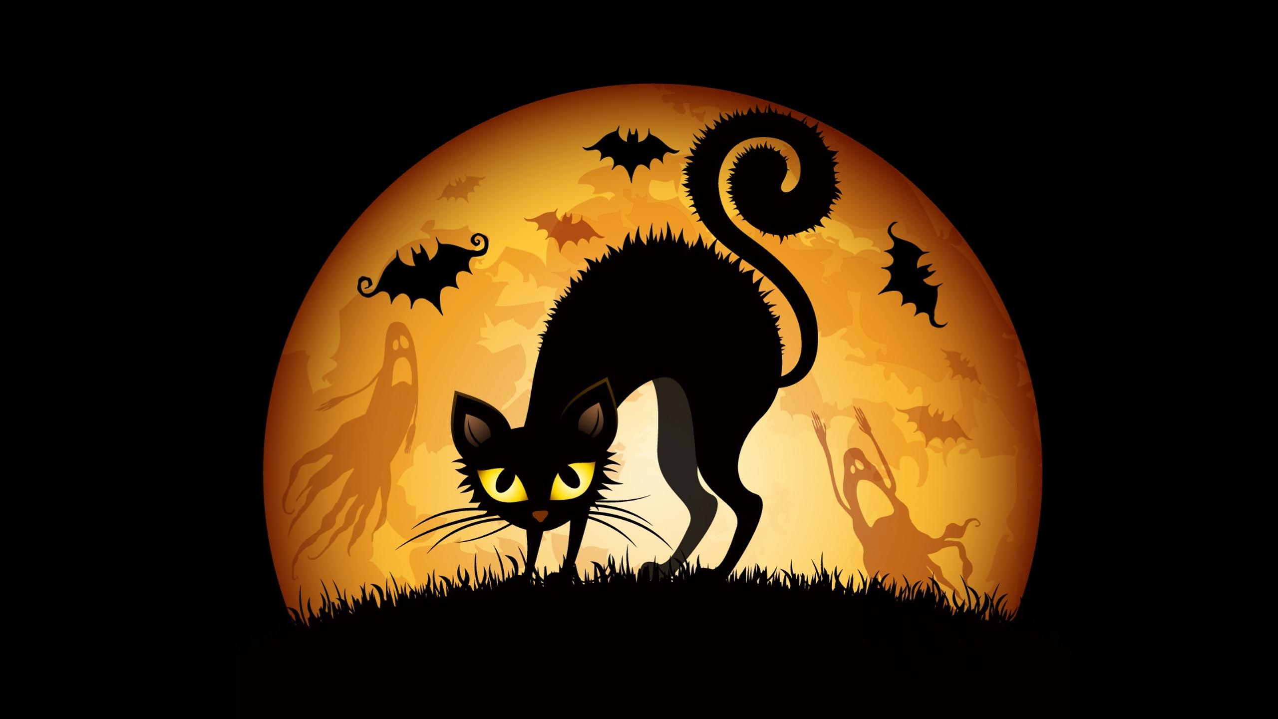 Best Wallpaper Night Cat - black-scary-cat-in-the-night-of-halloween-2560x1440  Picture.jpg