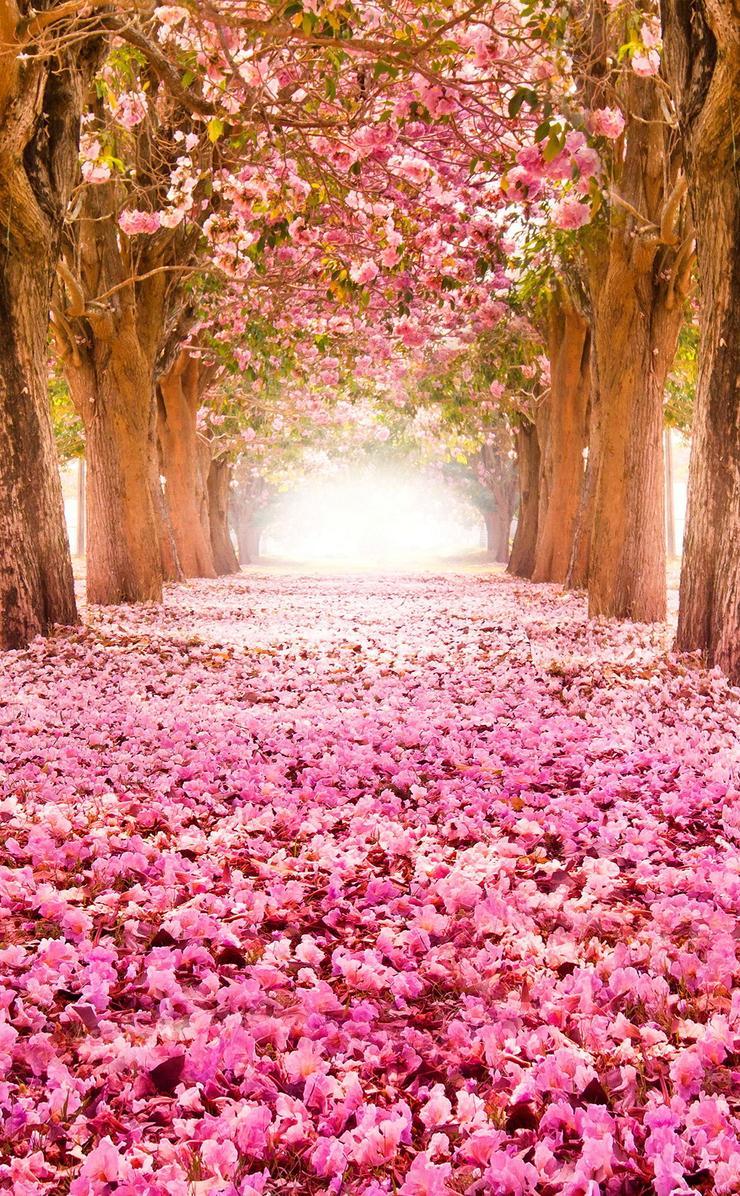 Секс цветы вишни 21 фотография