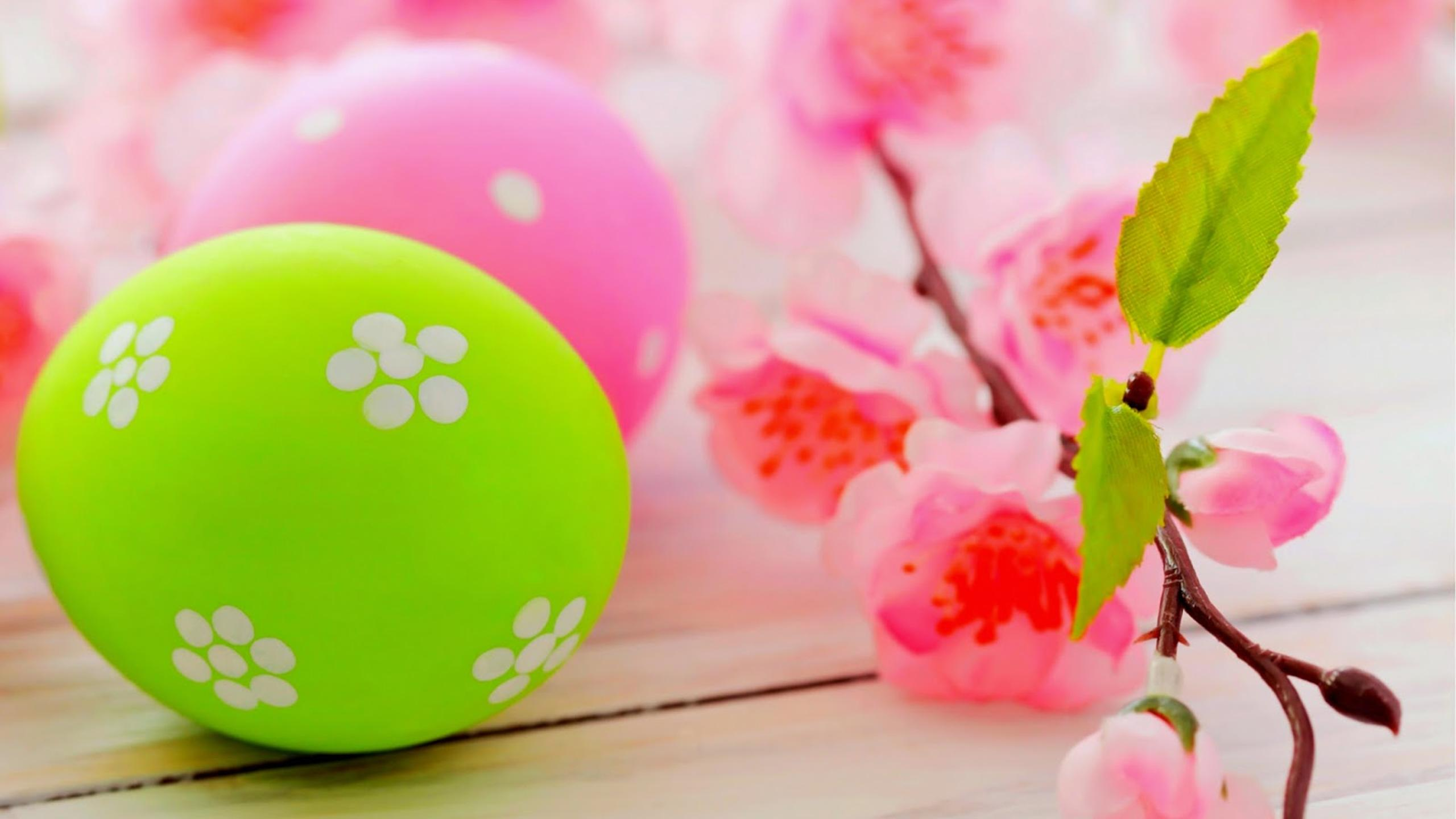 Blossom Tree Branch And Colourful Easter Eggs Hd