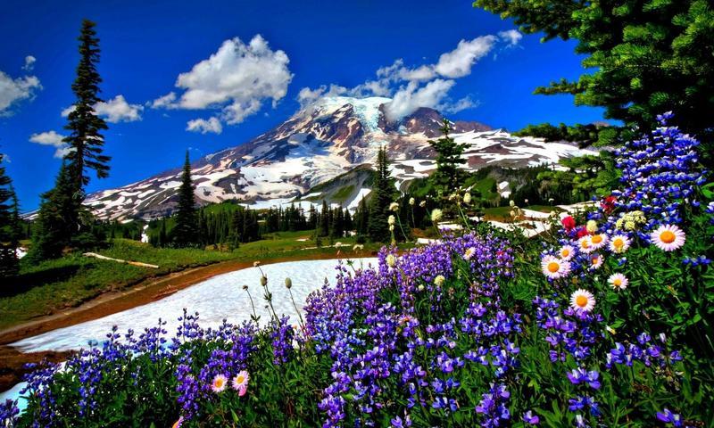 красивые картинки на рабочий стол природа цветы № 511981 без смс