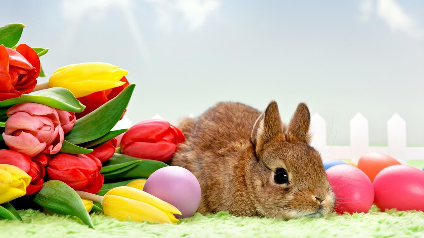 Brown Rabbit, Red Eggs And Many Tulips   Happy Easter Wallpaper Download  1366x768