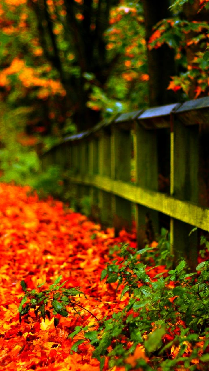 Carpet Of Autumn Leaves In Th Park Hd Wallpaper