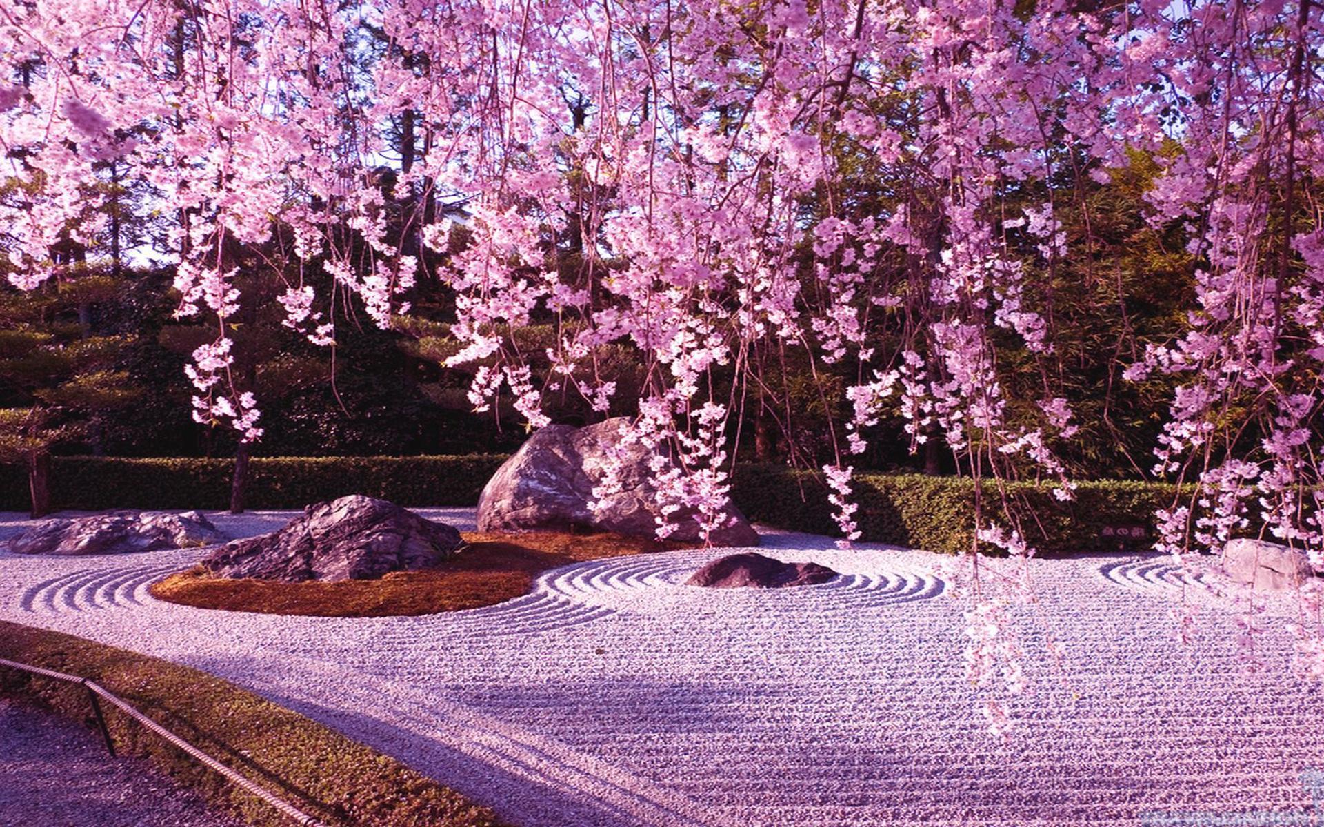 обои для рабочего стола весна япония № 60192 бесплатно