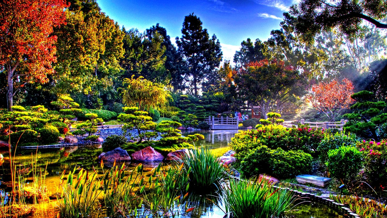 colorful nature in the sun rays   japanese garden