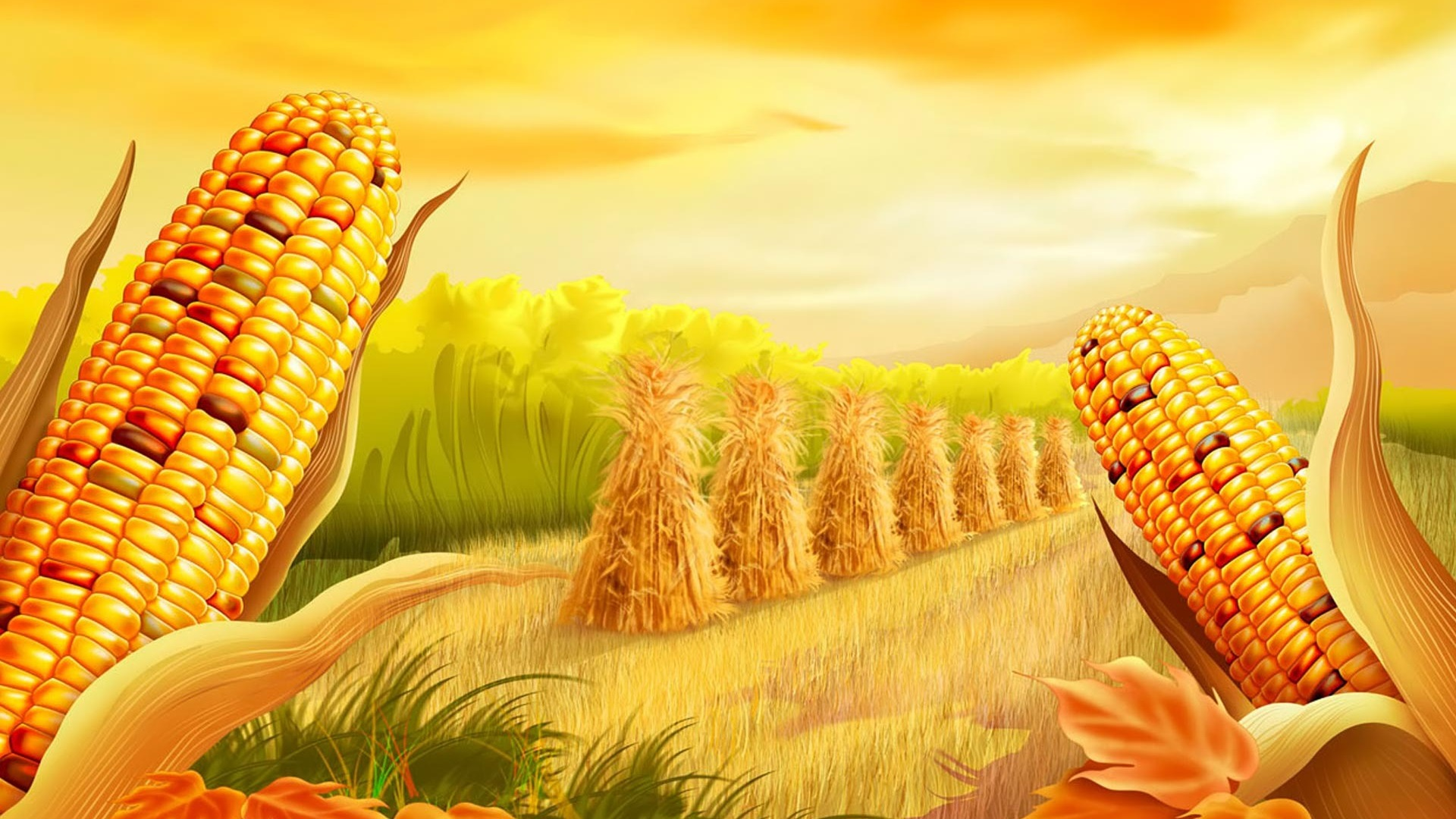Corn Ready To Harvest