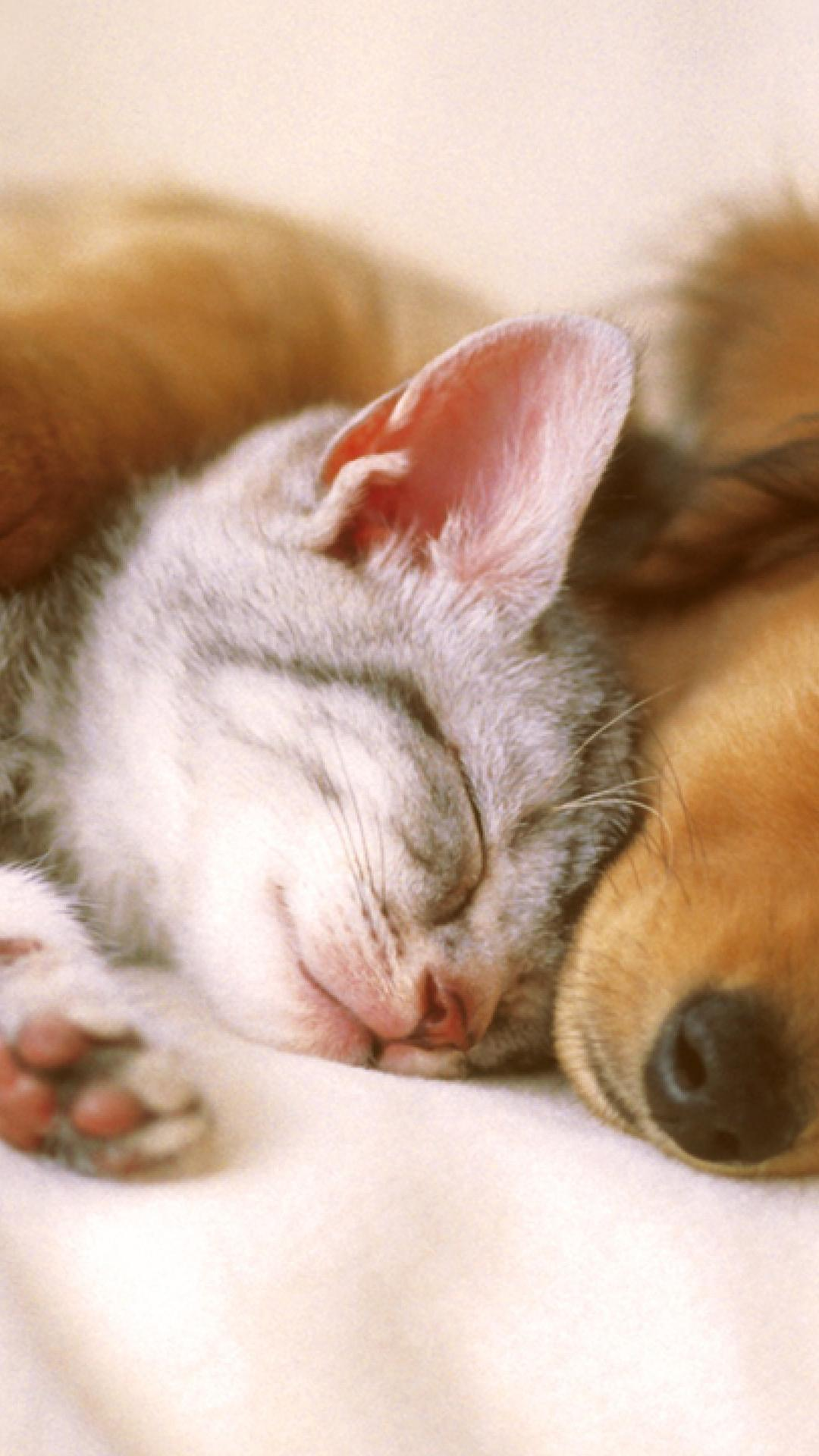 cute cat and dog sleep embrace wallpaper download 1080x1920
