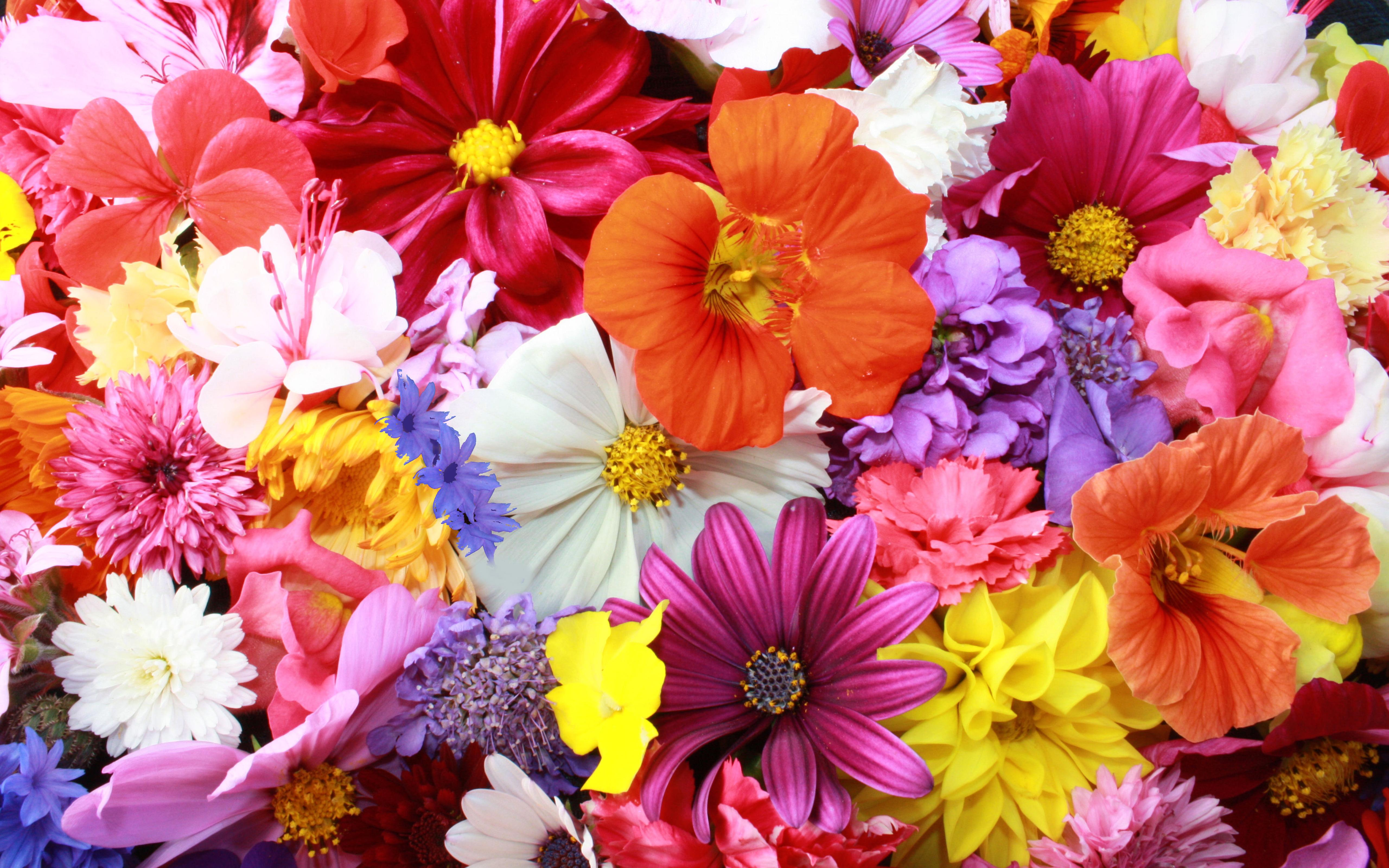 Different flowers in different colors wallpaper download for What makes flowers different colors