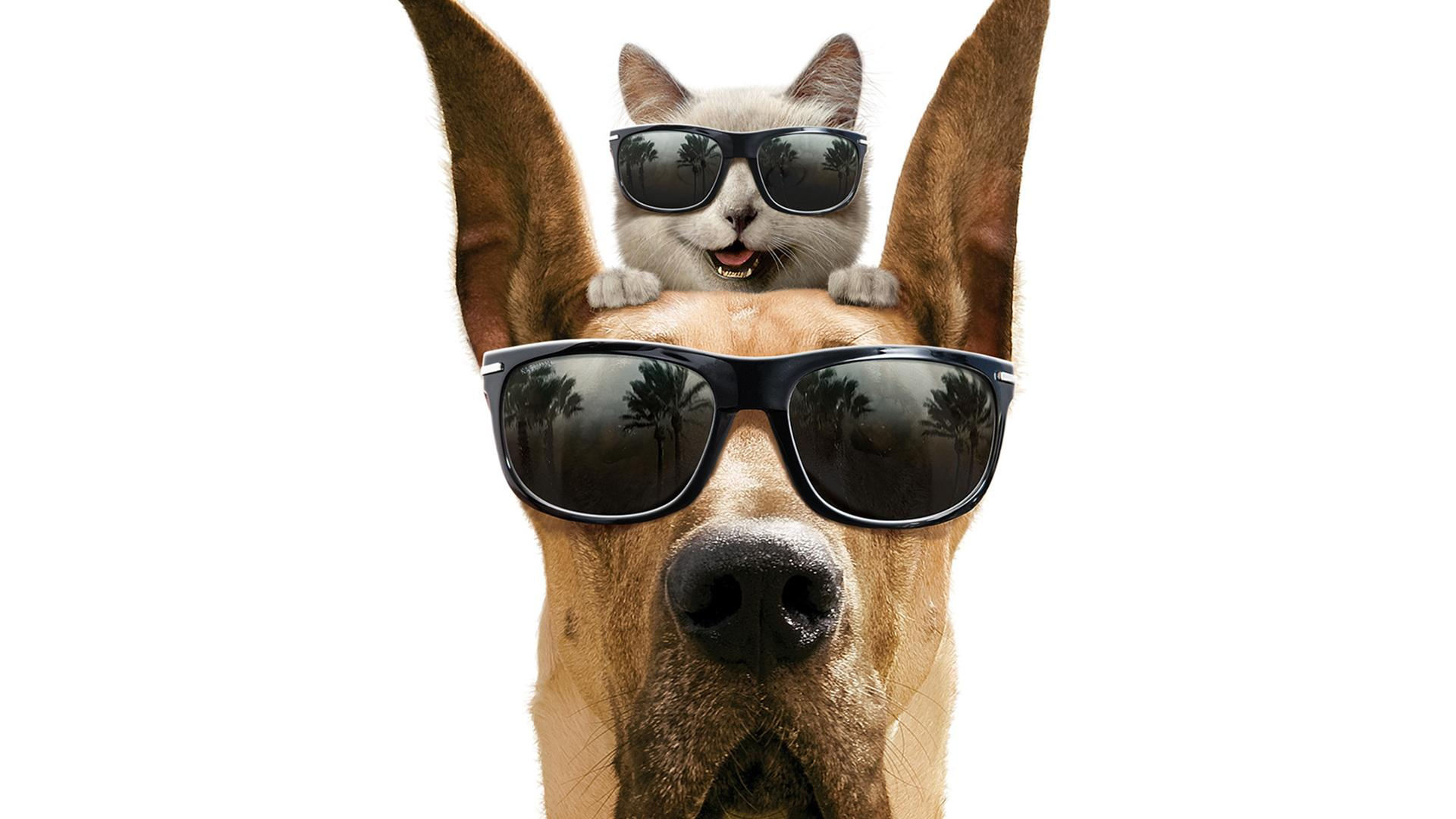 Dog And Cat With Glasses