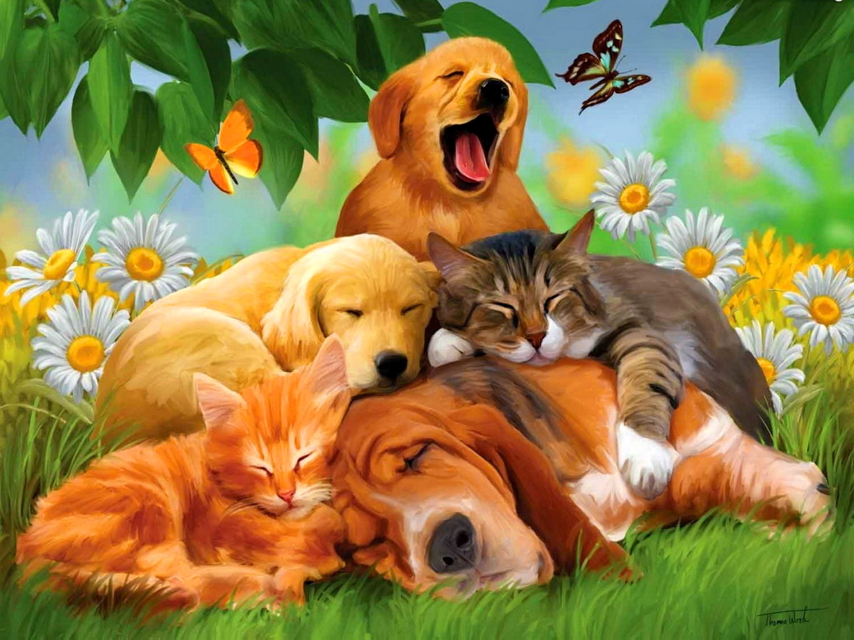 Dogs and cats sleep in the garden between the flowers - Best animal wallpaper download ...