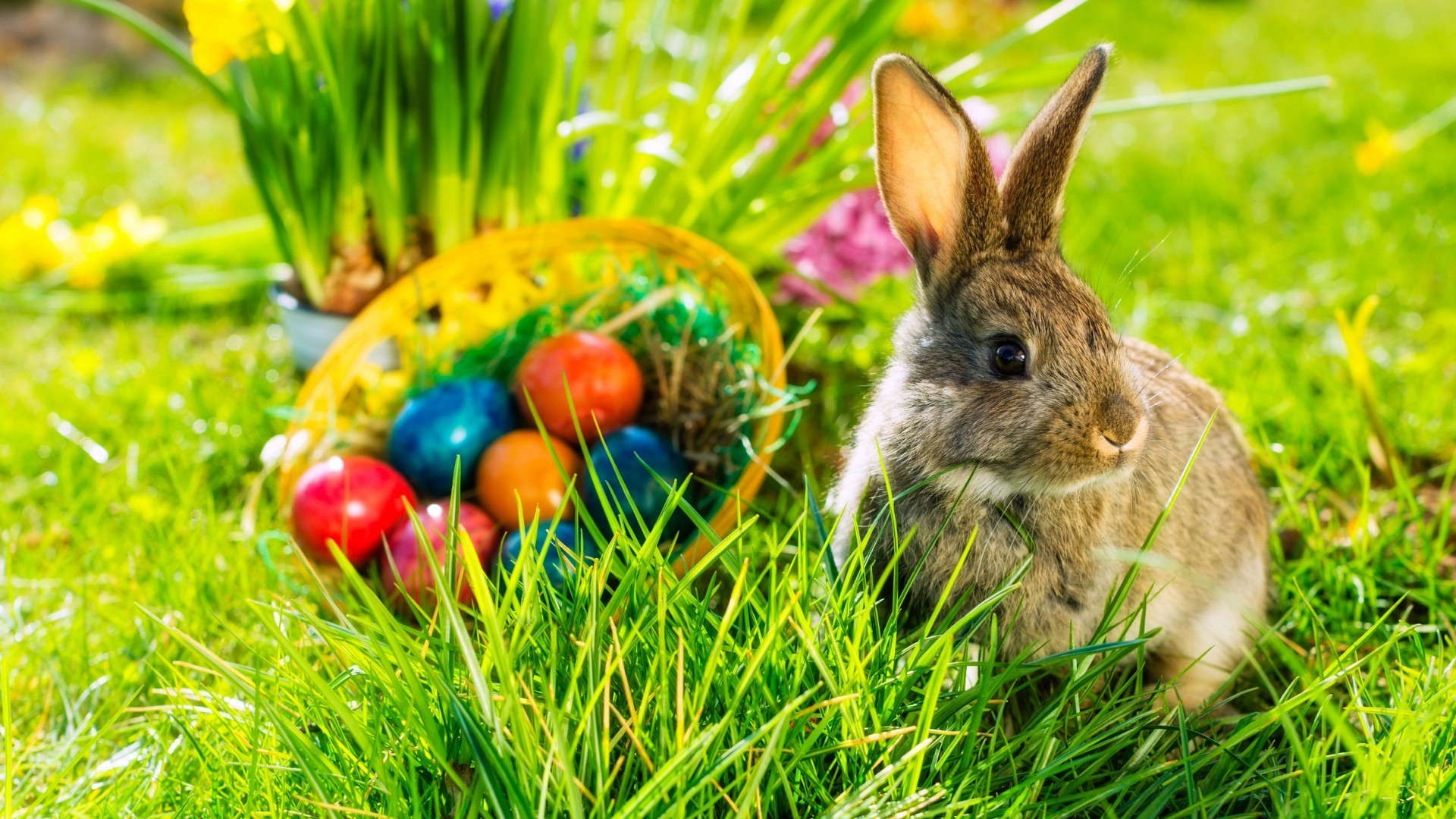 Alfold Gyongye Hotel Easter Time Fluffy Rabbit In The Green Grass Of Spring Wallpaper