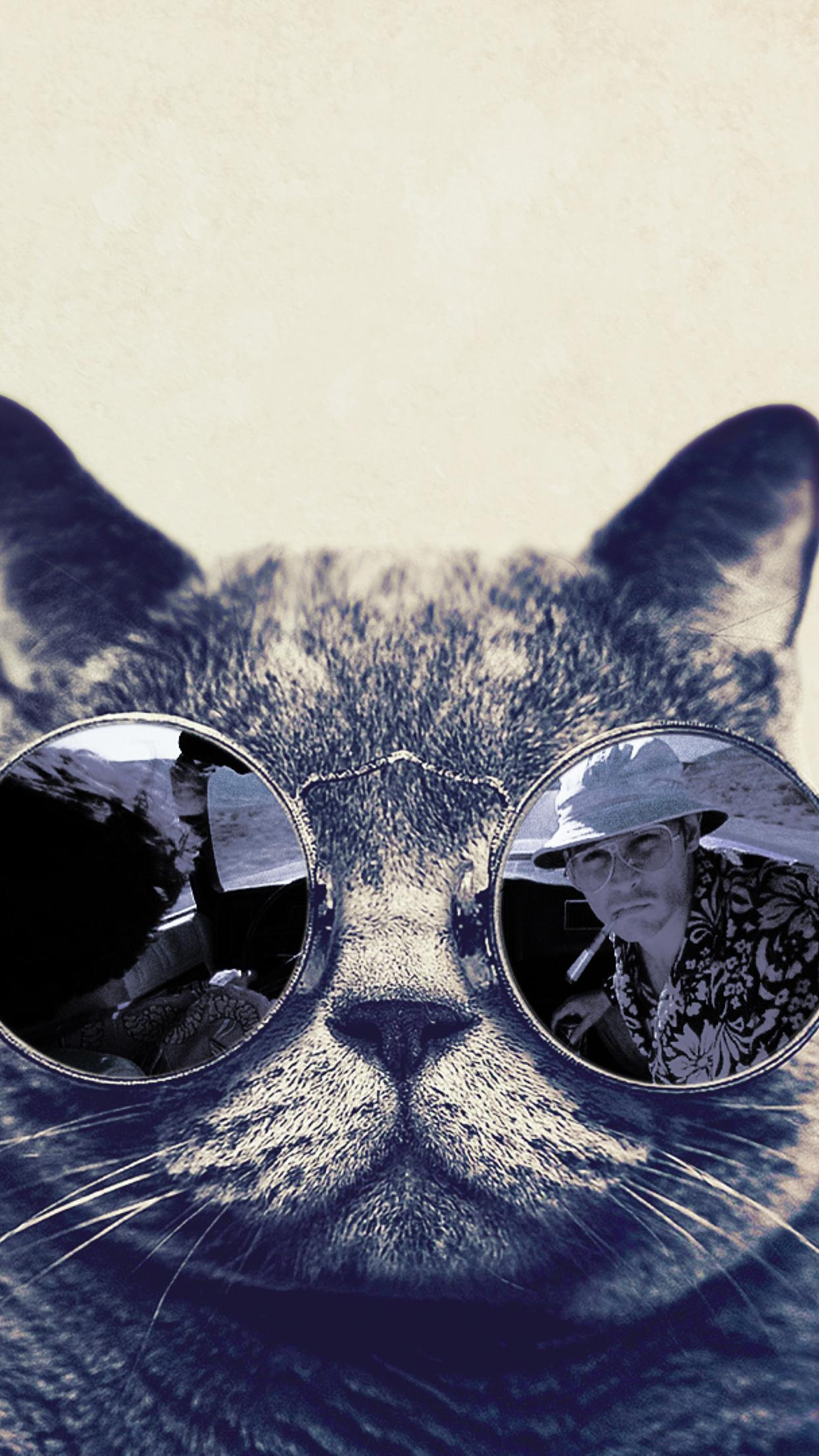 Fashion Cat With Sunglasses Hd Funny Wallpaper Wallpaper Download 1242x2208