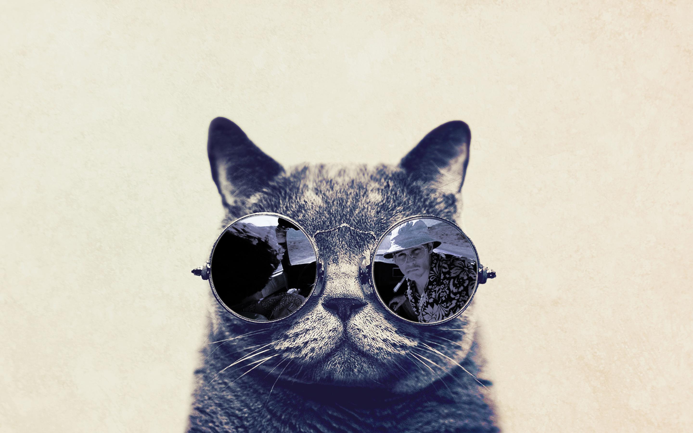 Top Wallpaper Macbook Cat - fashion-cat-with-sunglasses-hd-funny-wallpaper-2880x1800  HD_895677.jpg