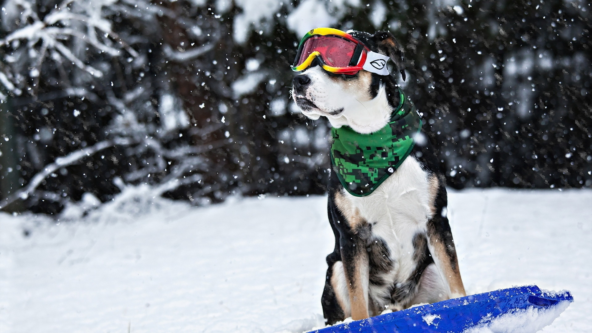 Funny Dog With Ski Goggles And Scarf Cool Dog
