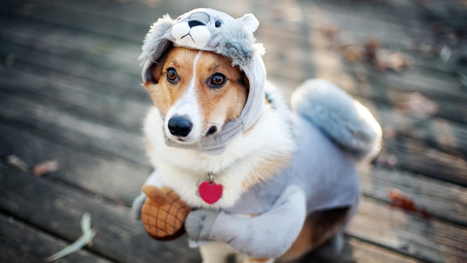 Funny Sweet Dog Costume Animal Wallaper