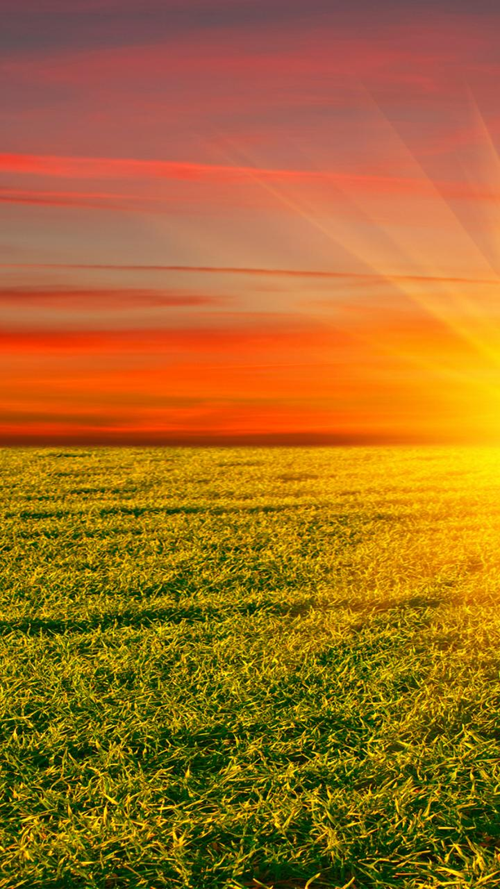 Golden Sun Over The Green Field Hd Nature Wallpaper