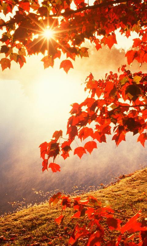 Good Morning Autumn Sunlight Hd Wallpaper Wallpaper