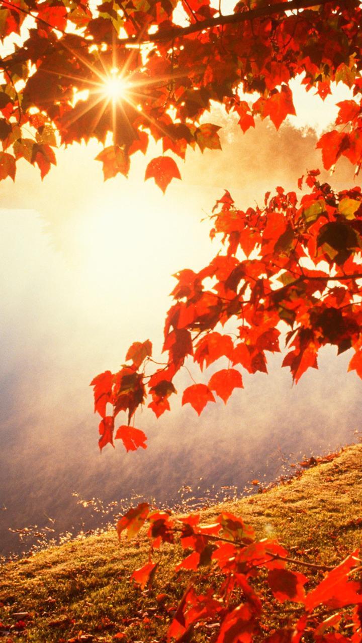 Good morning autumn sunlight hd wallpaper wallpaper for Sfondi 720x1280