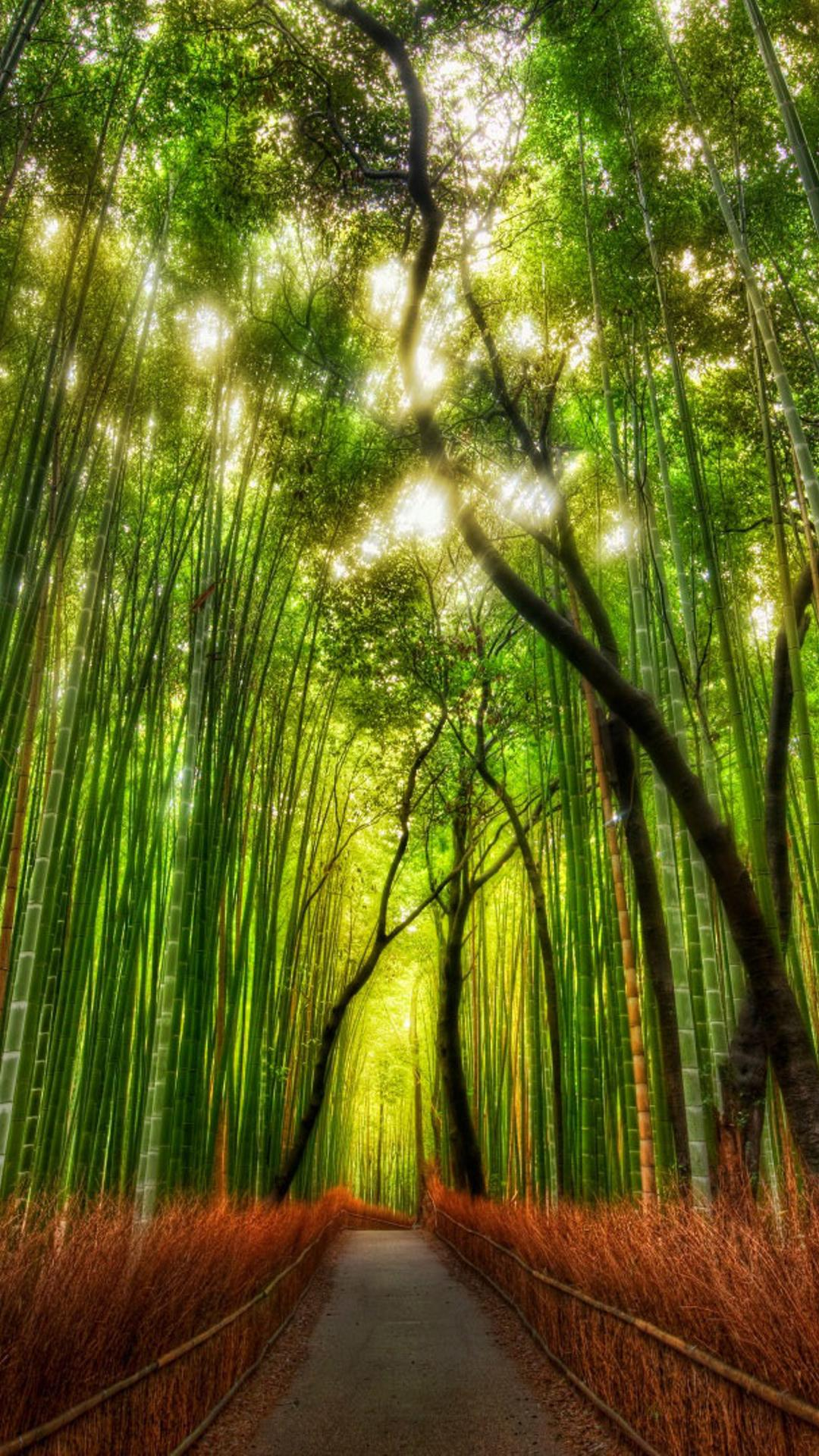 green and red bamboo forest in the sunlight wallpaper download 1080x1920