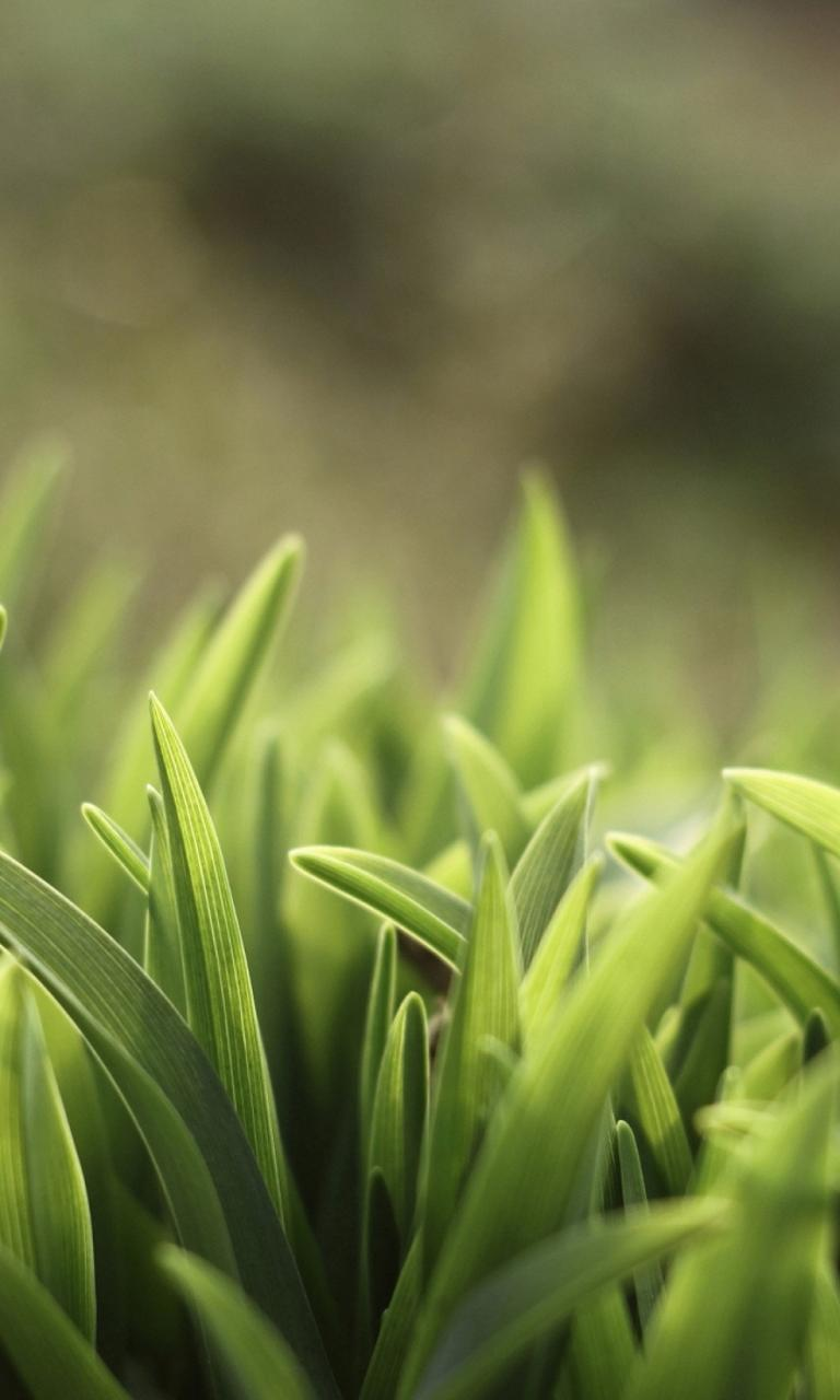 Green Grass In Field Macro Hd Wallpaper Wallpaper Download 768x1280