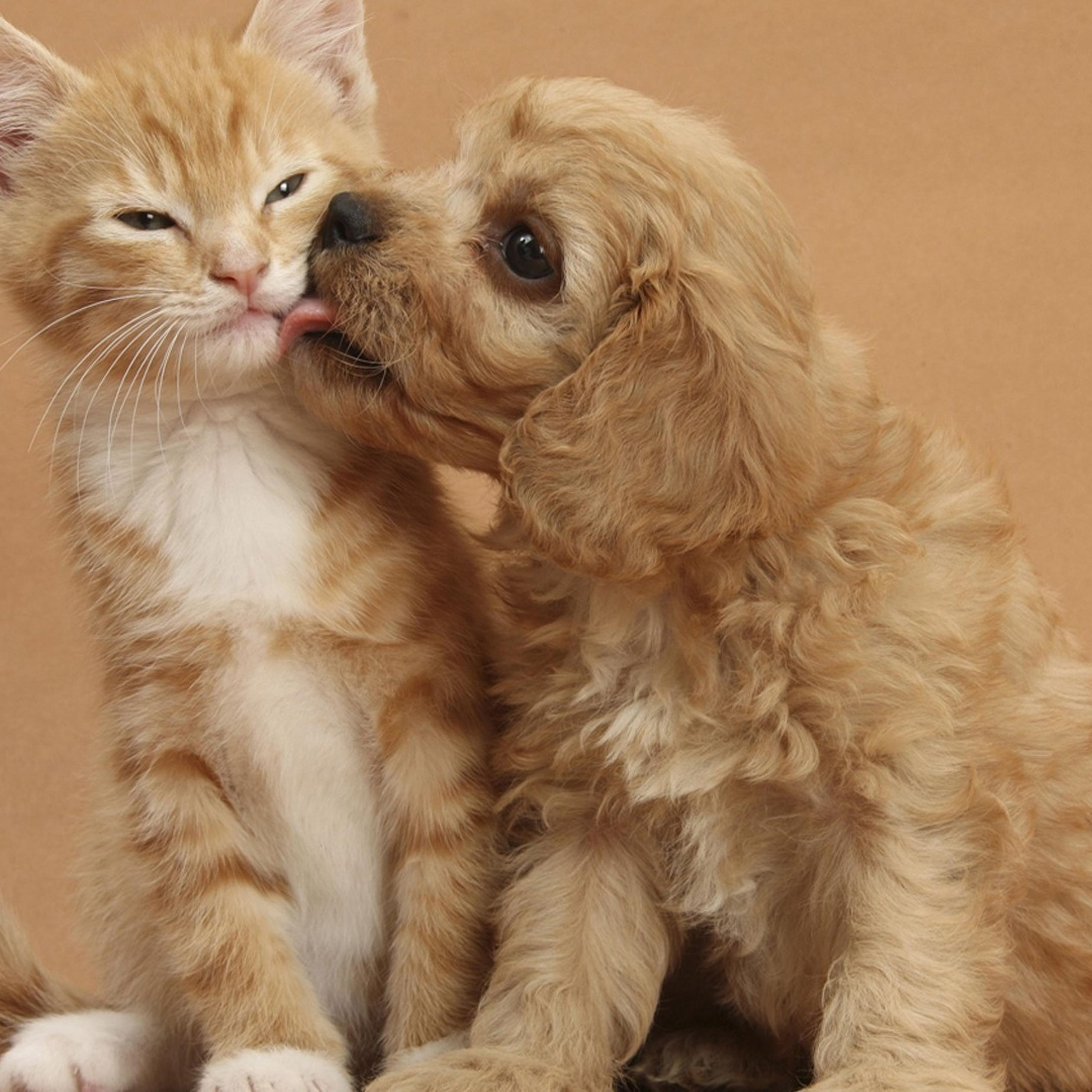 Kiss Between Sweet Dog And Cat Wallpaper Download 2524x2524