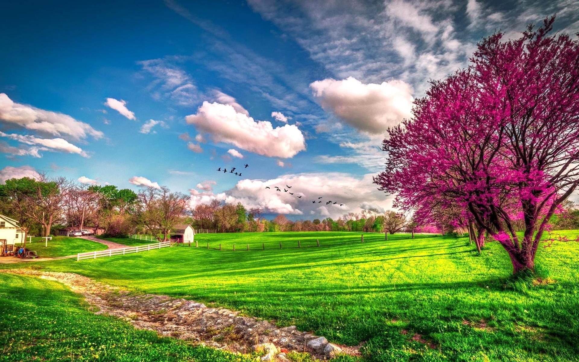 Landscape beautiful spring nature - HD wallpaper Wallpaper ...